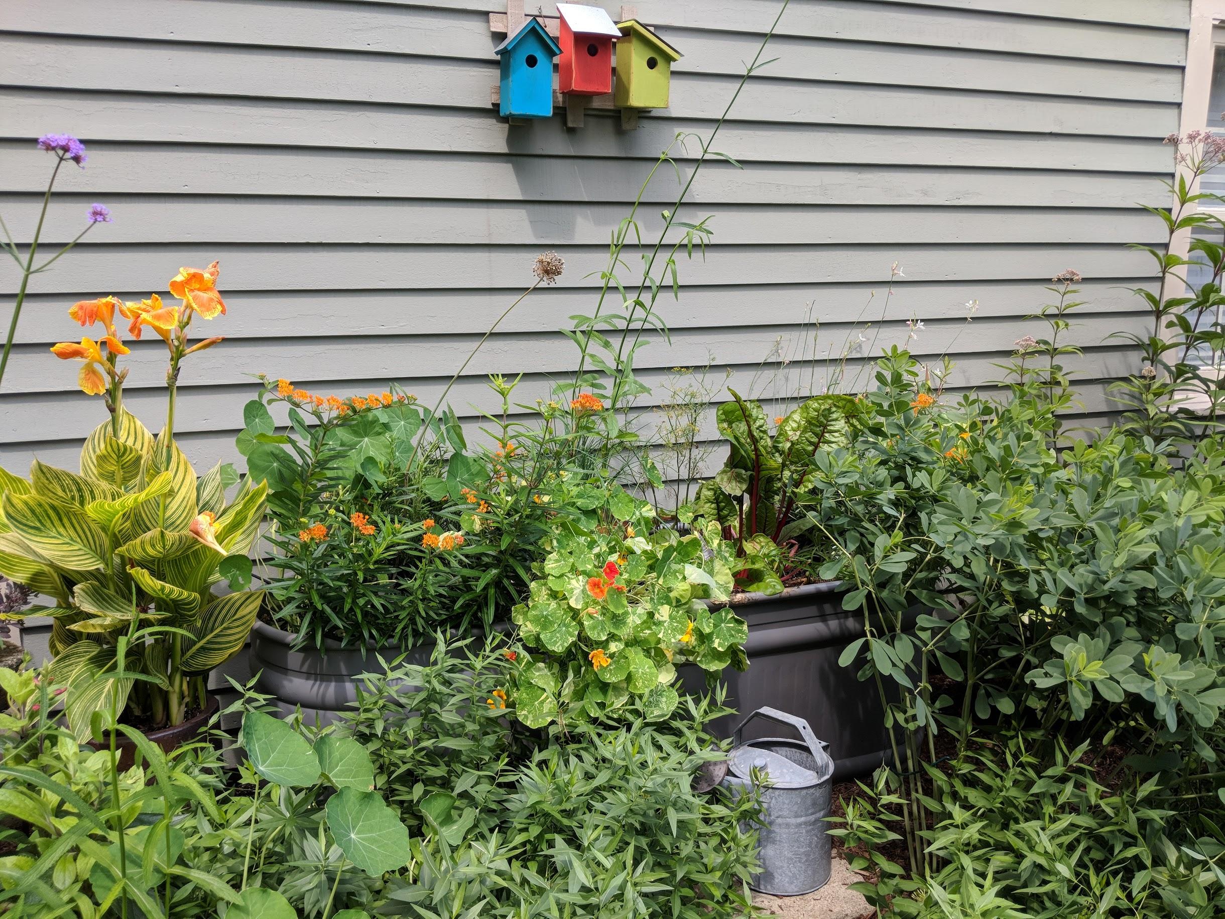 2018-07-30-horse-trough-garden.jpg