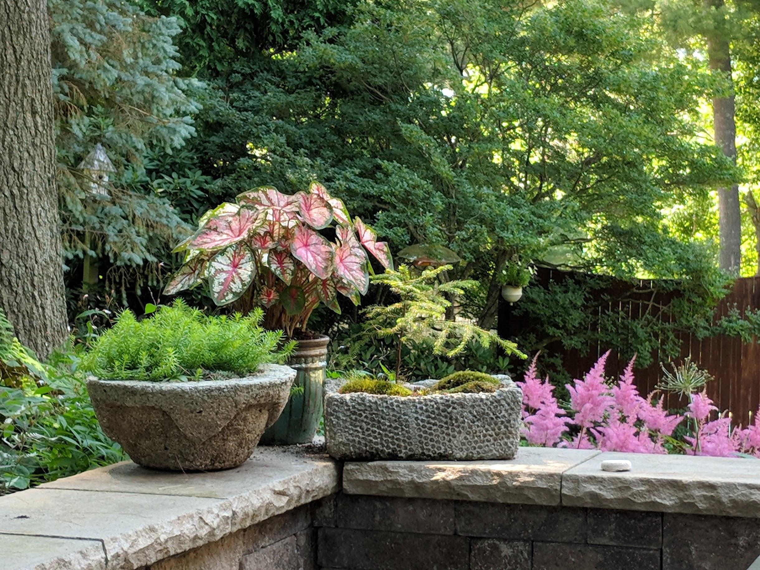 2018-07-04-patio-pots-caladium-sedum-hypertufa.jpg