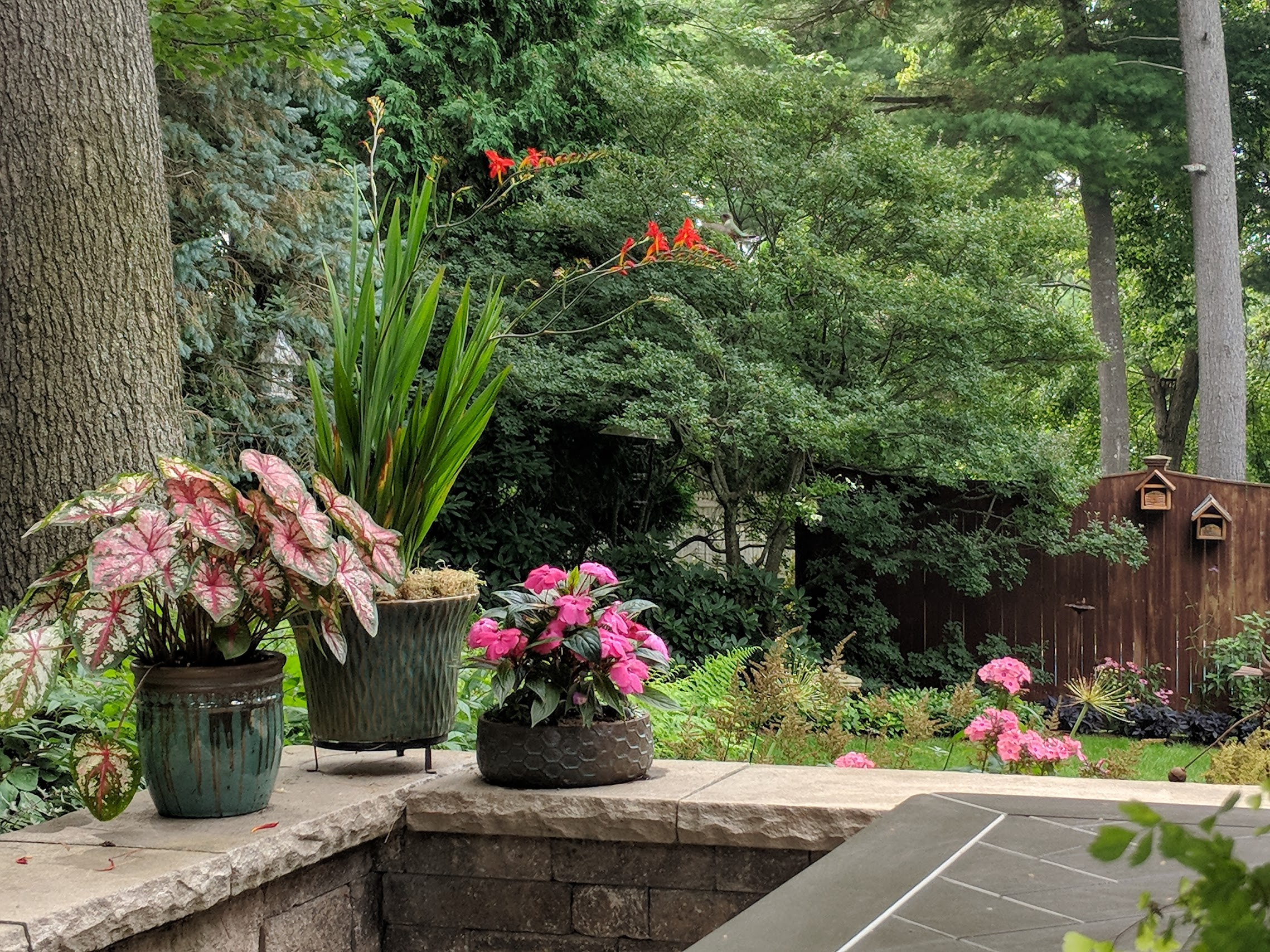 2018-07-30-patio-container-crocosmia-hummingbird.jpg