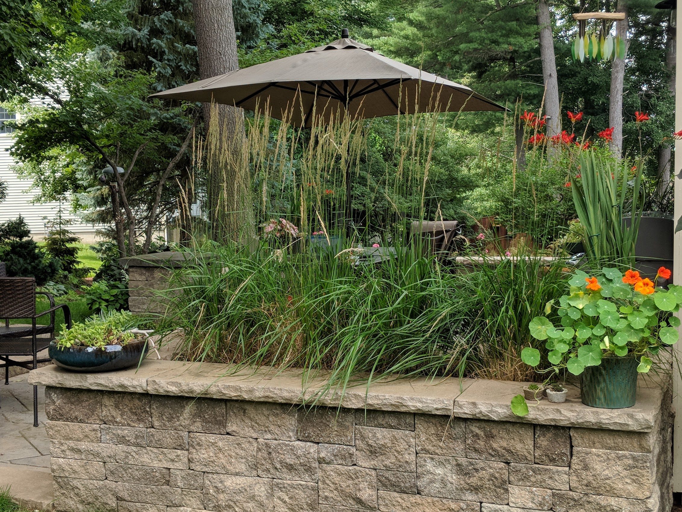 'Karl Foerster' provides light screening of  patio space