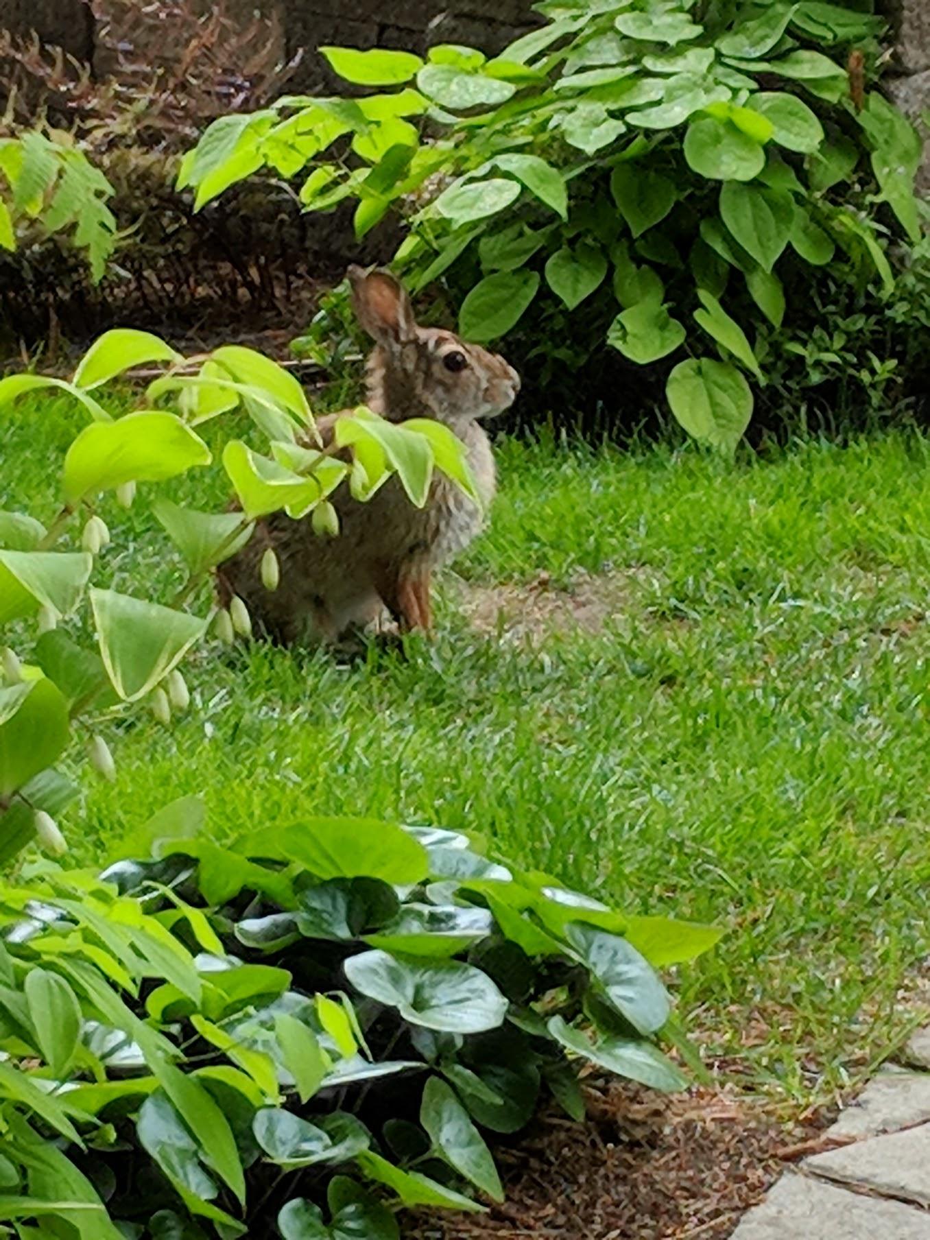 2018-05-19-bunny.jpg