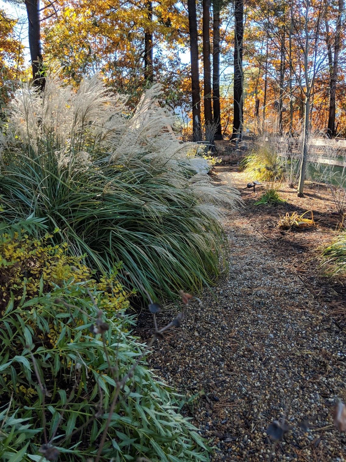 2018-11-07-path-grasses.jpg