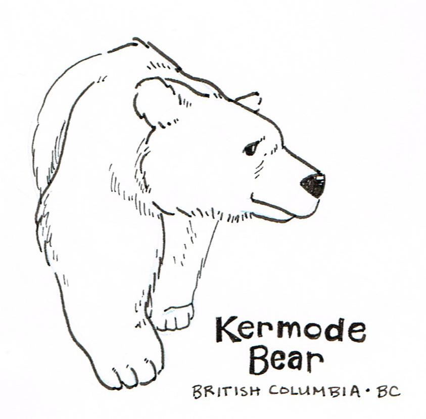 KermodeBearLines.jpg