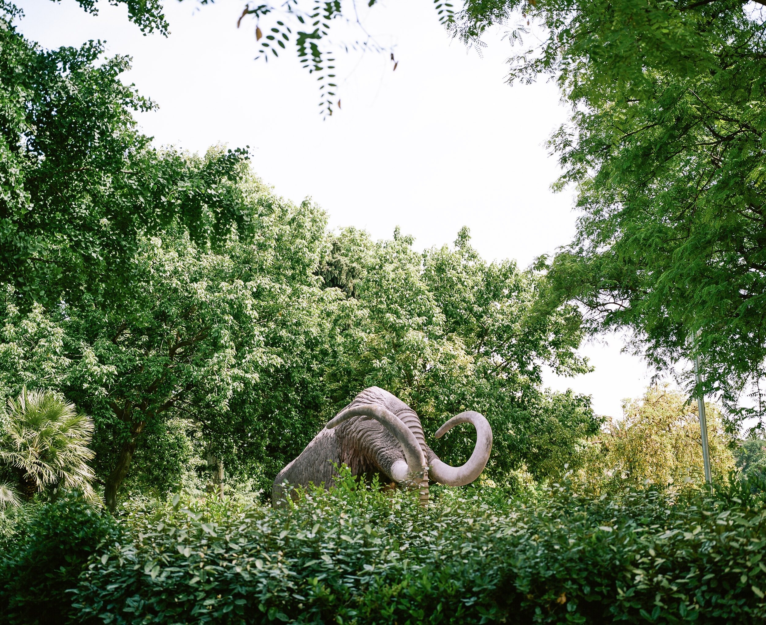 Stone Mammoth in a park in  Barcelona Spain