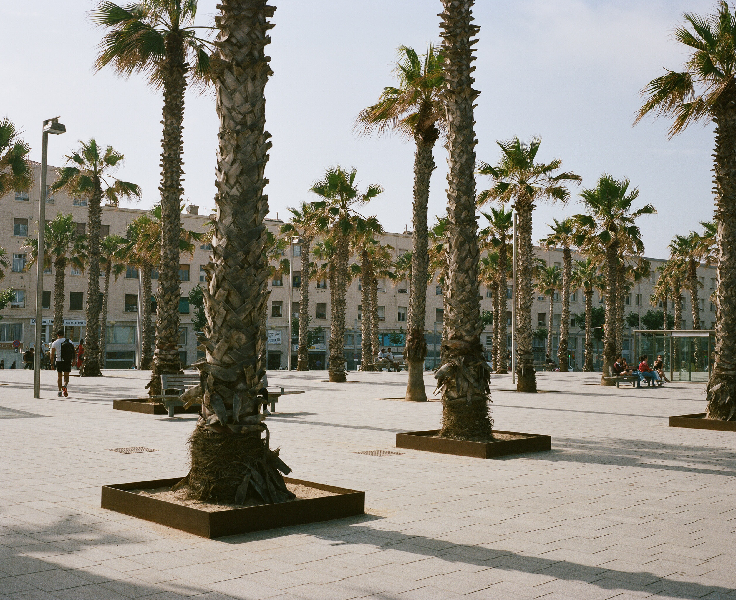 Palm trees in planters in Barcelona, Spain in front of a building