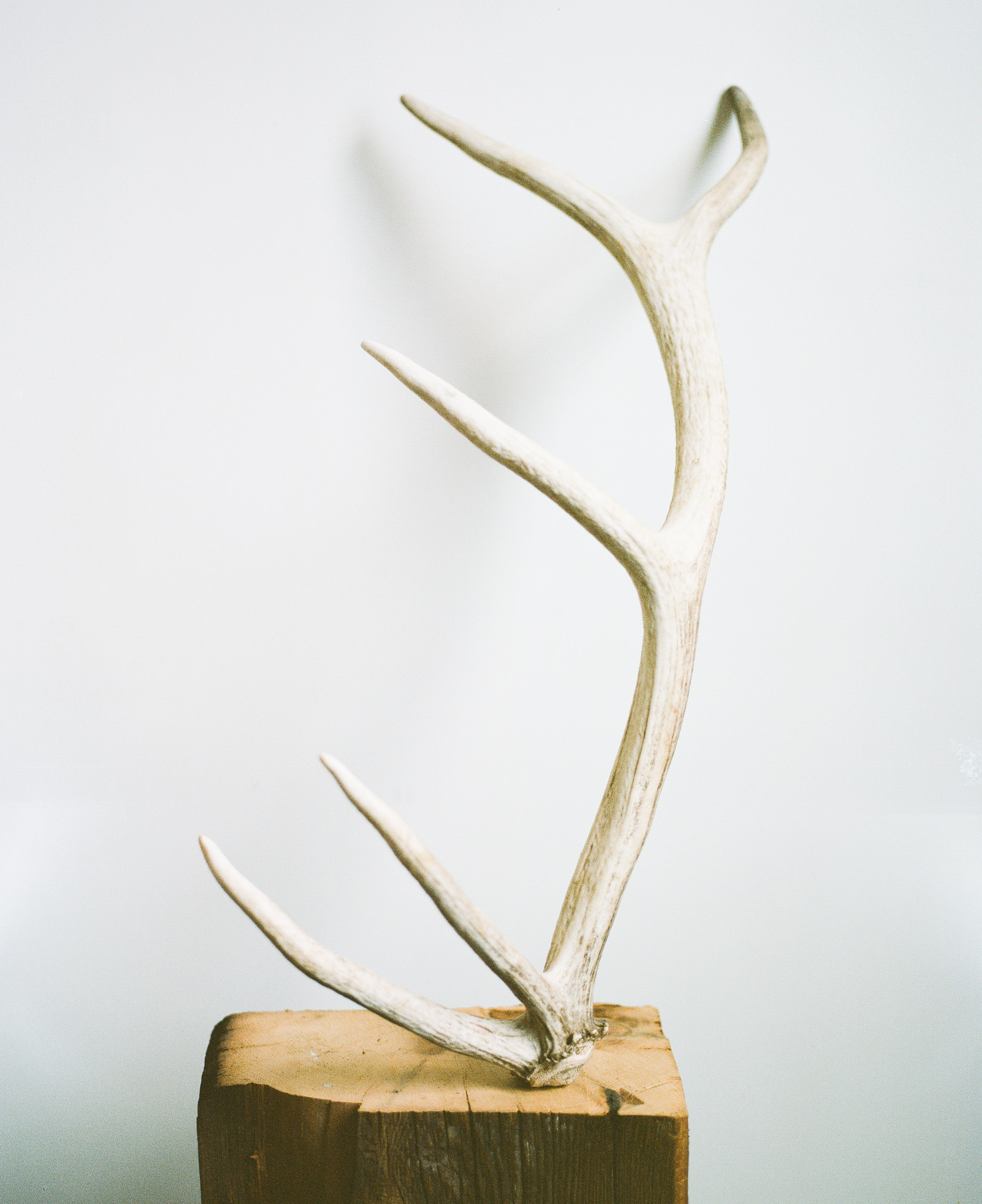Elk Antler on a block of wood