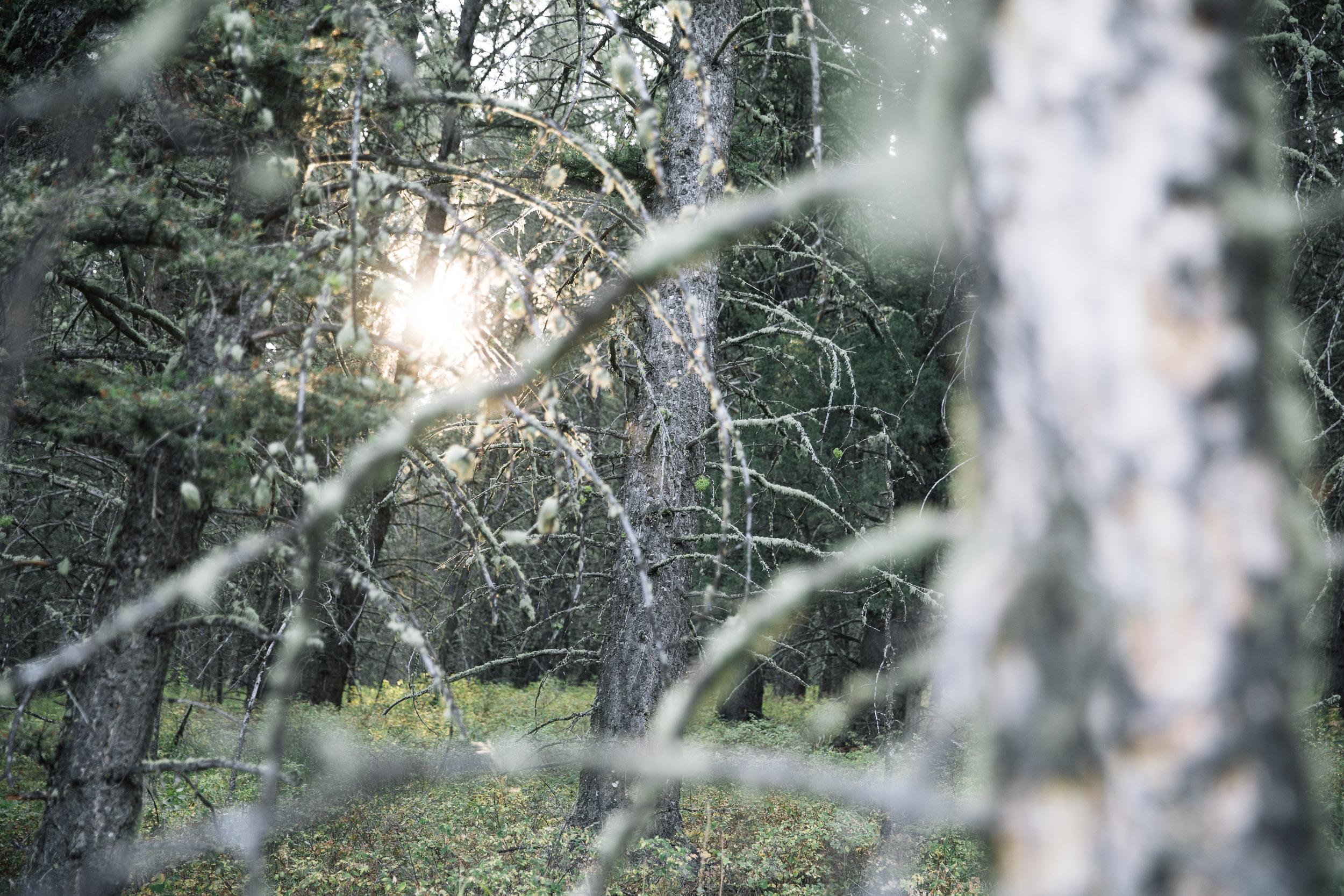 Sunglare through deep forrest trees