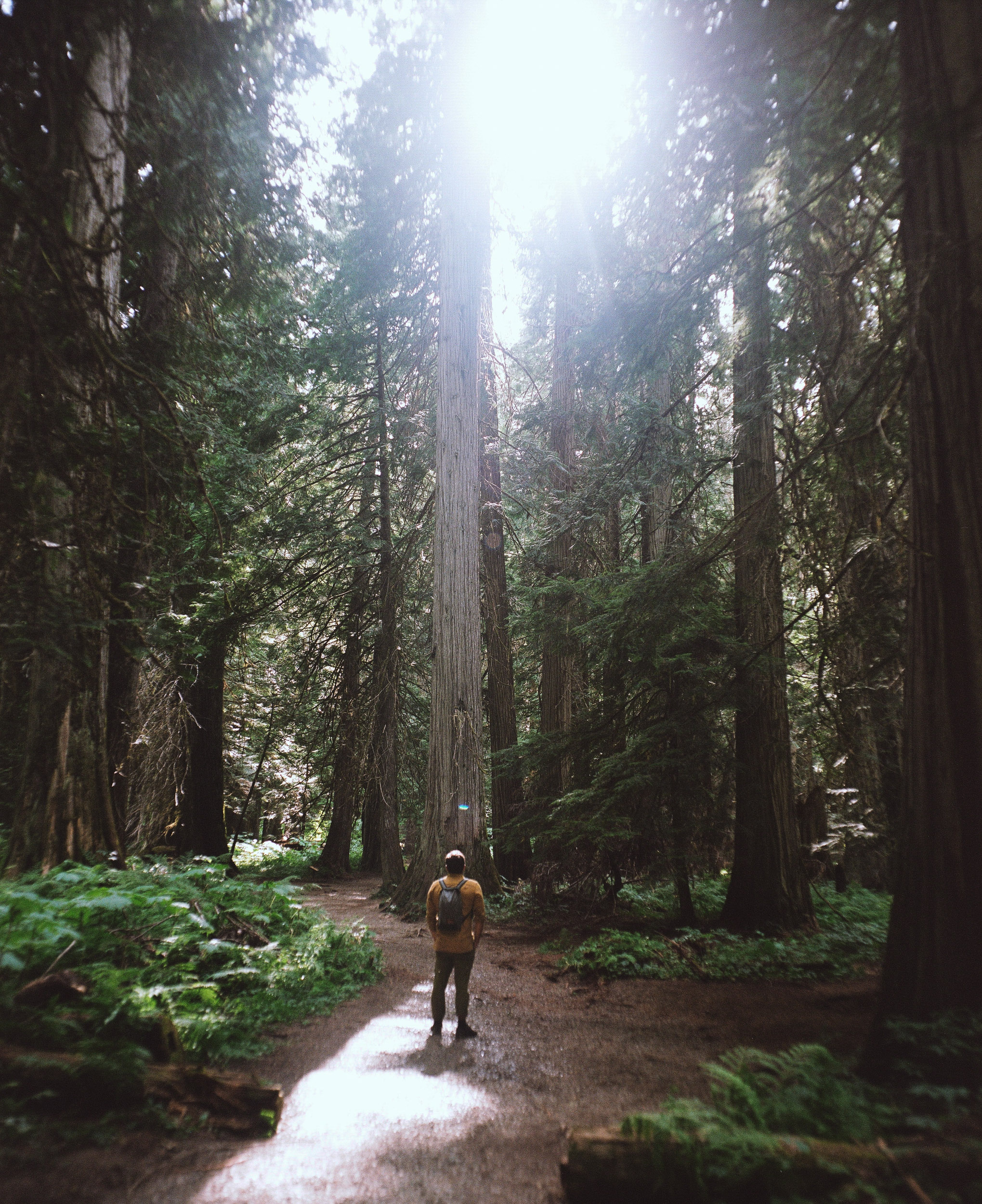 Hiker in the woods wearing a yellow shirt