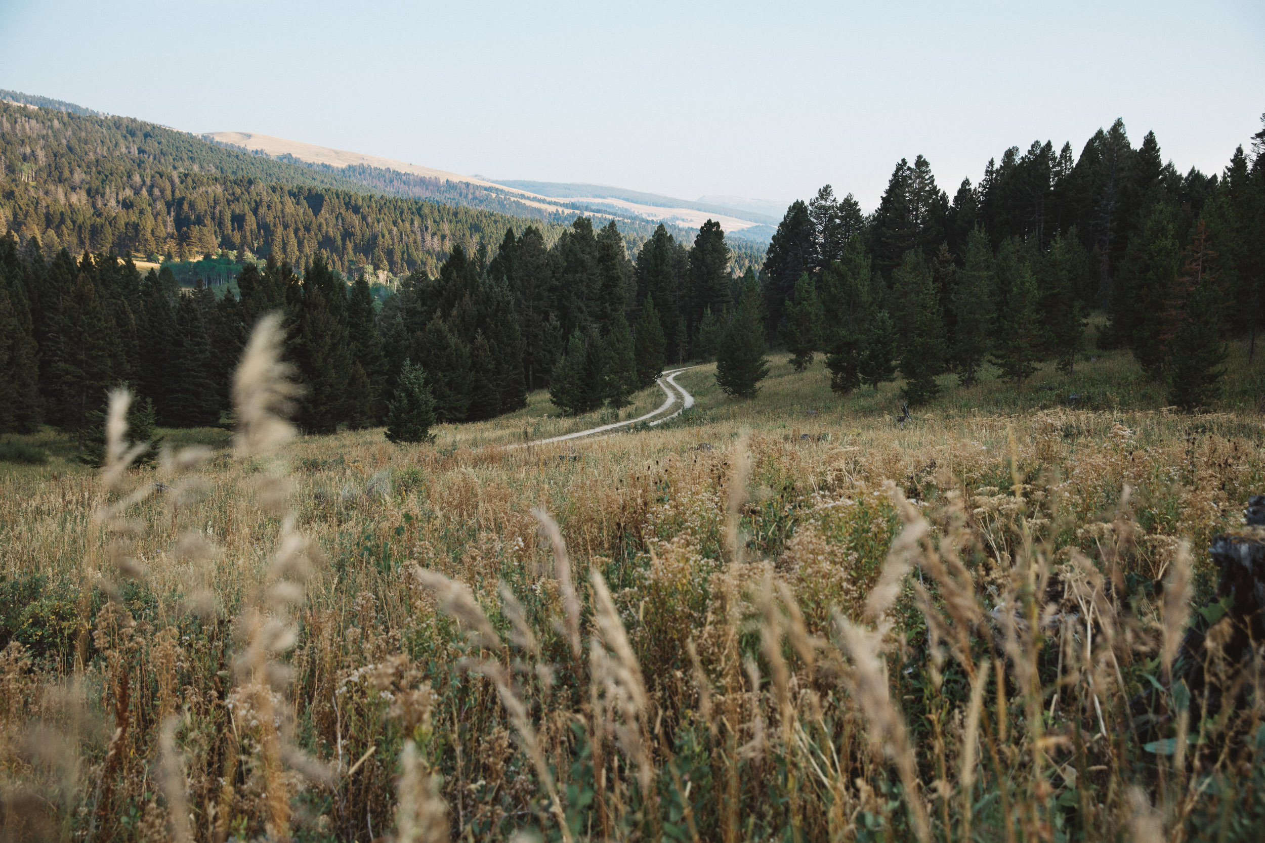 Dirt backroad in Mountains of Montana with grass in the foreground