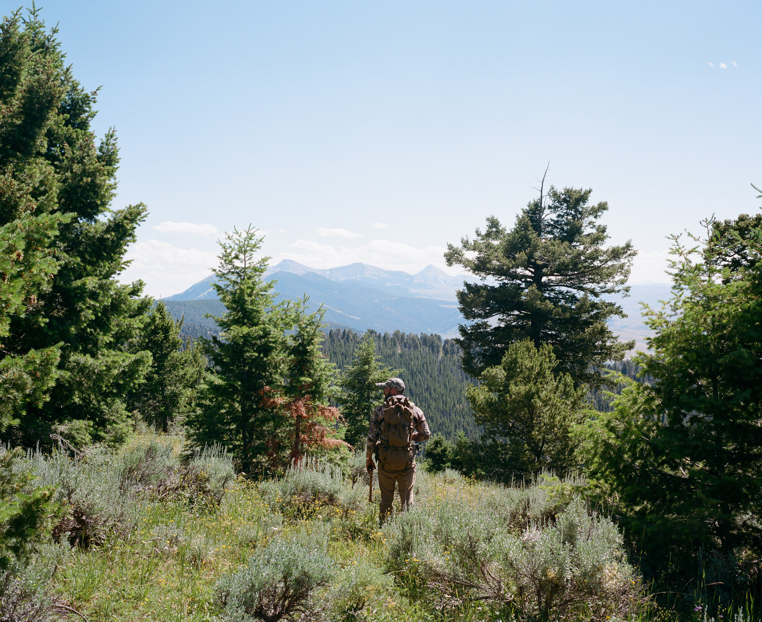 Hunter in camouflage standing between trees in the mountains of Montana