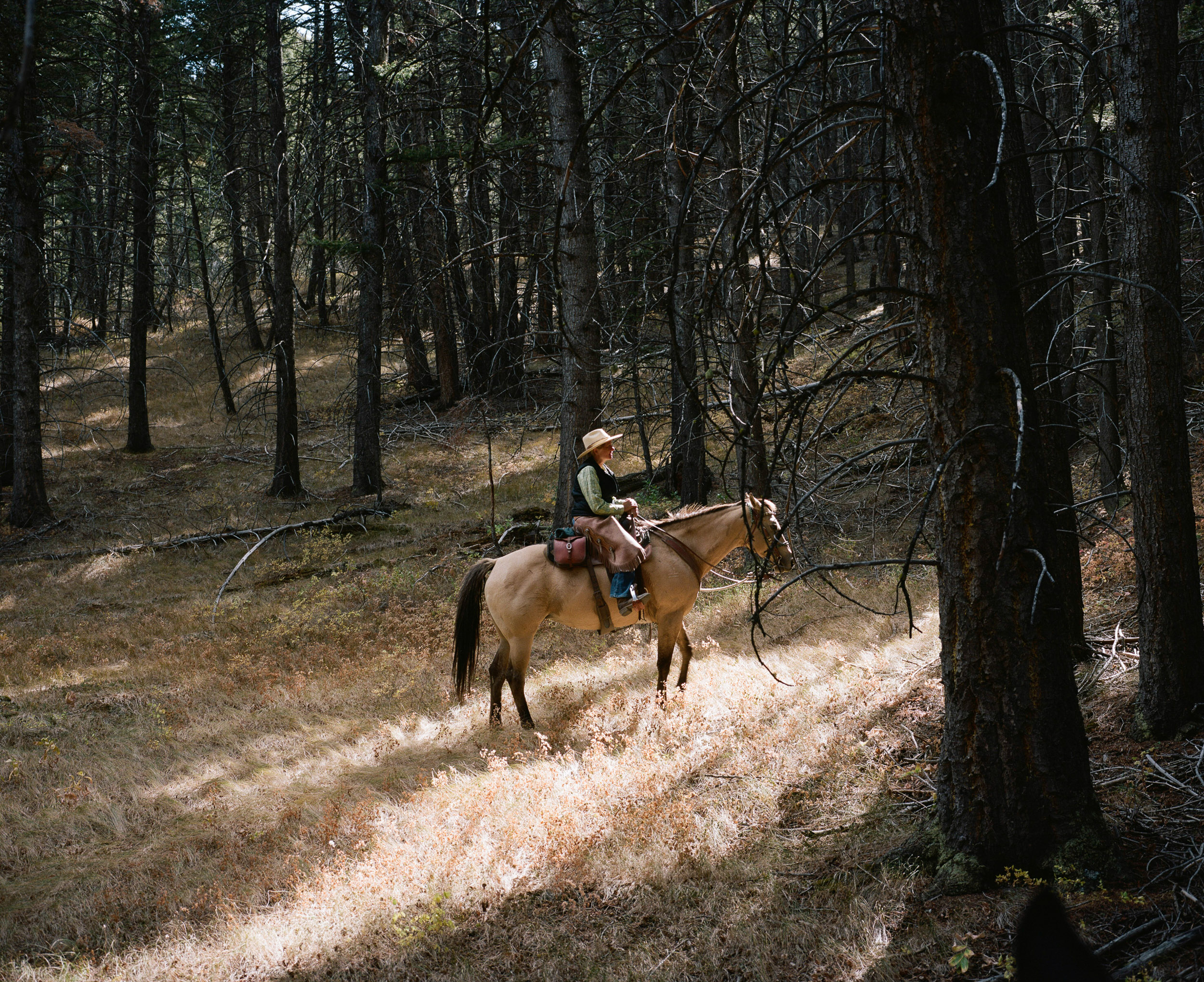 Woman on a horse in dry grass in a patch of sunlight
