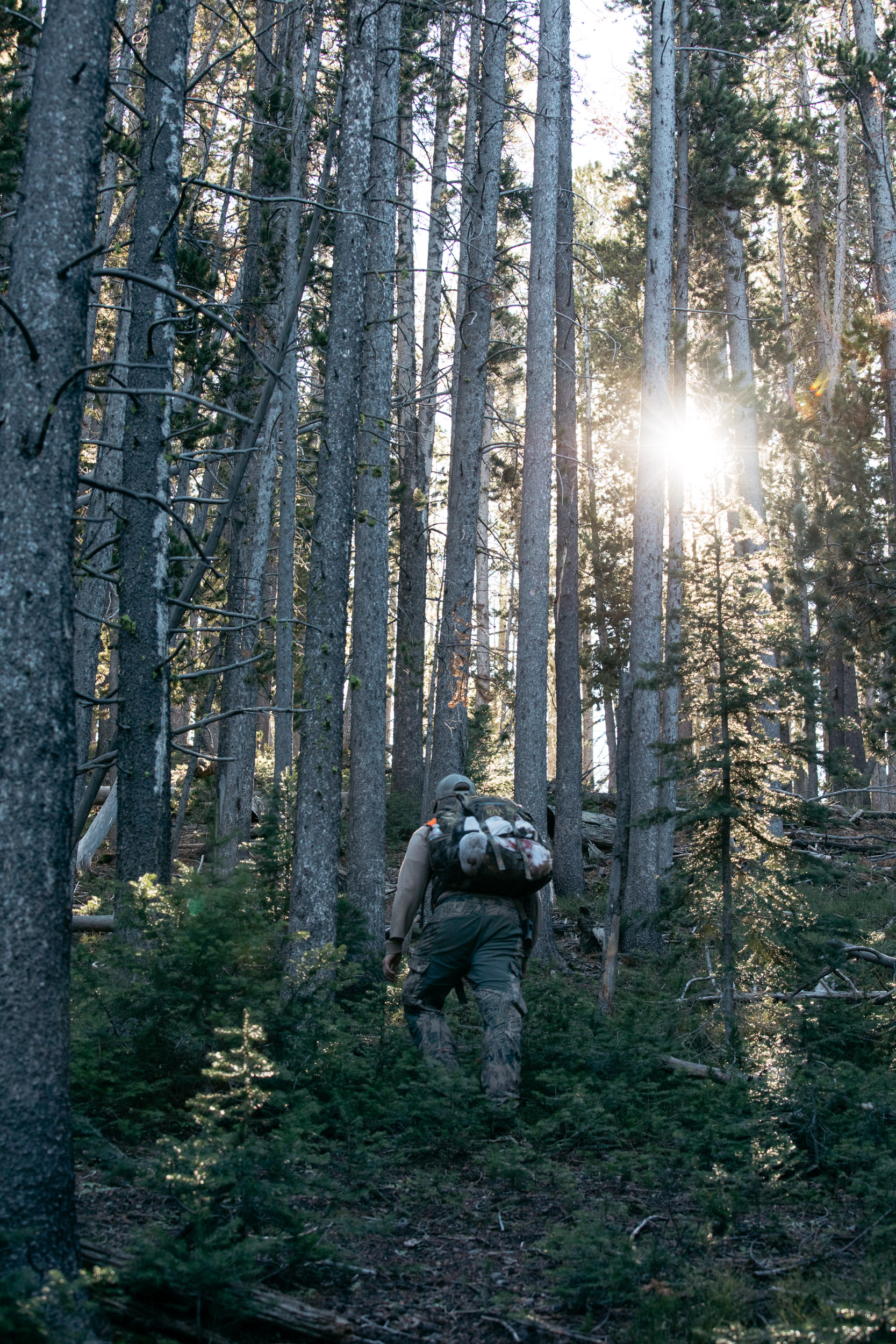 Hunter in the woods going towards a sunglare