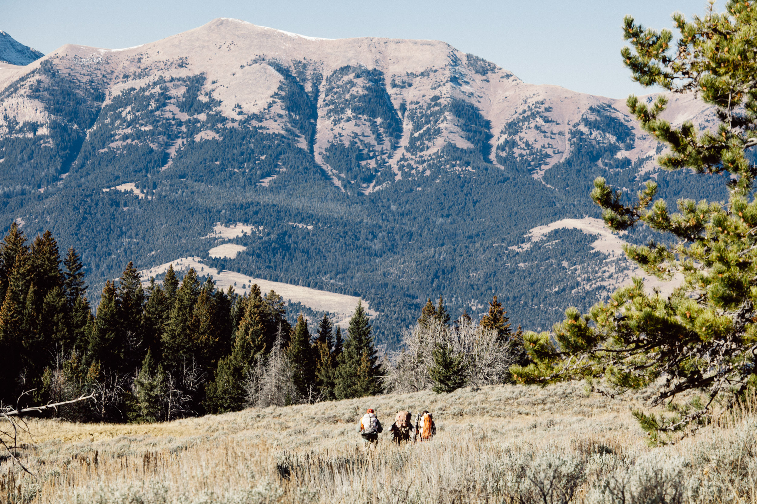 Hunters packing out an elk from the Rocky Mountains in Montana