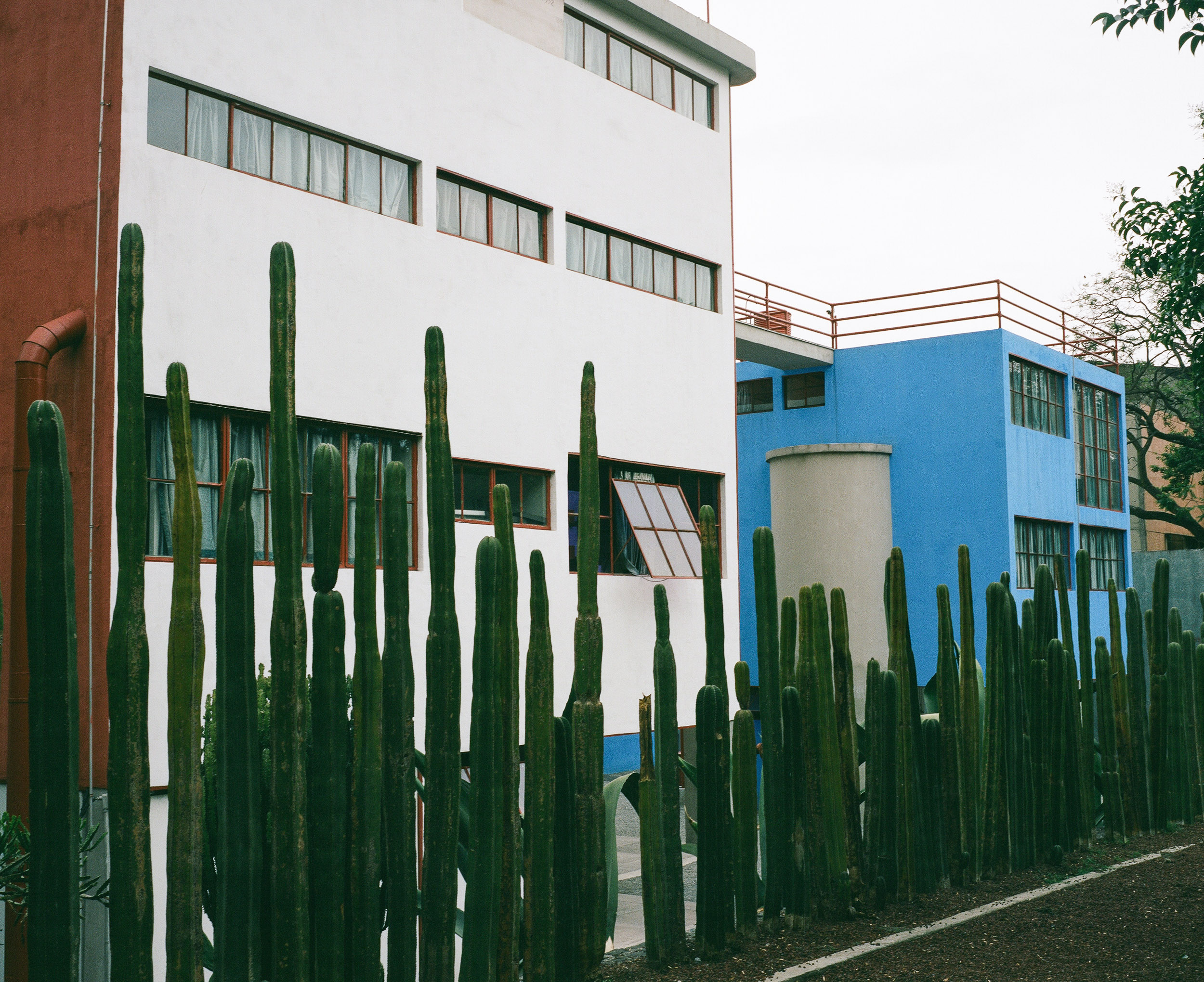Cactus wall in front of Diego Rivera's studio, San Angel, Mexico