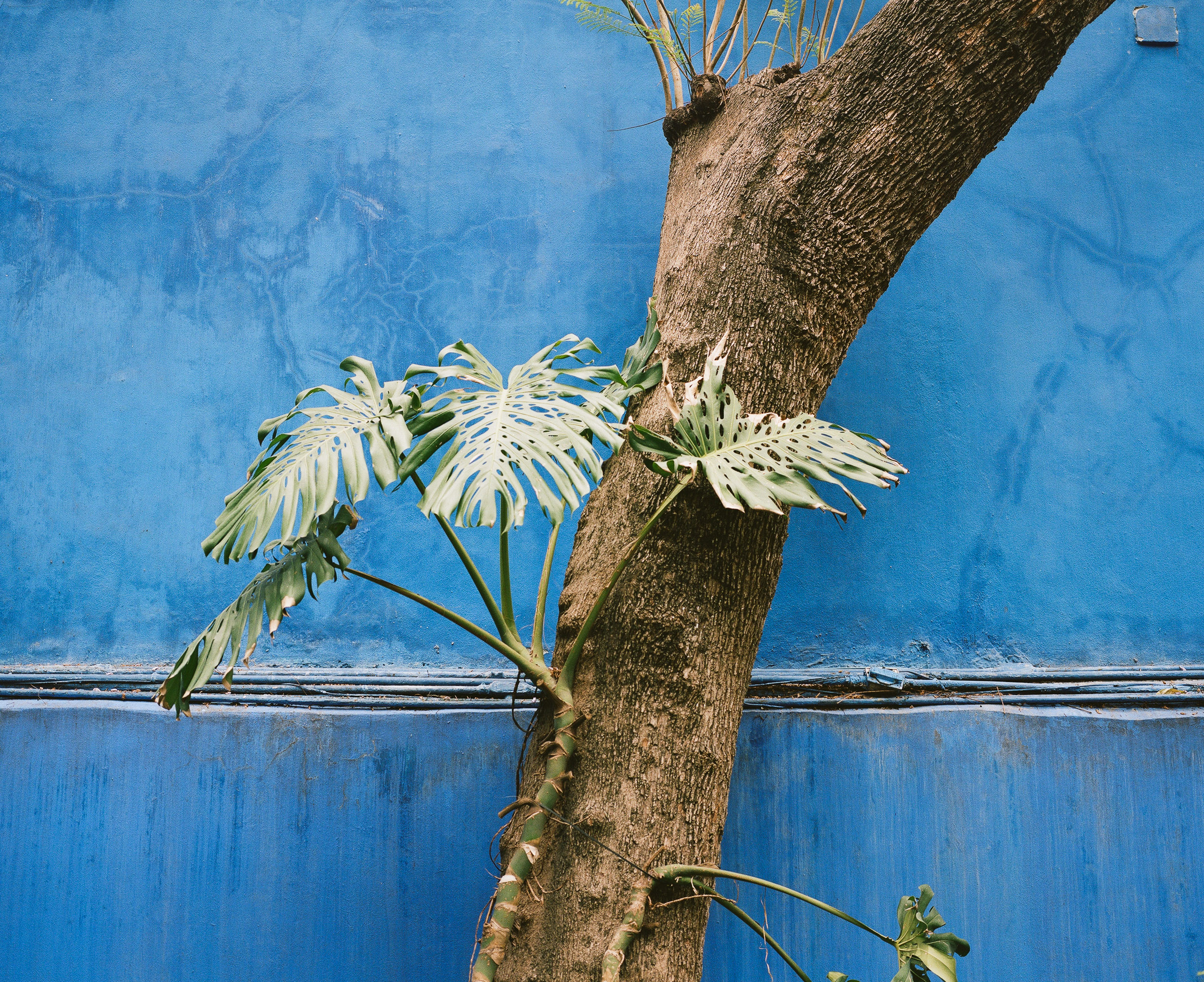 plants growing on a tree at the Casa Azul, Mexico City
