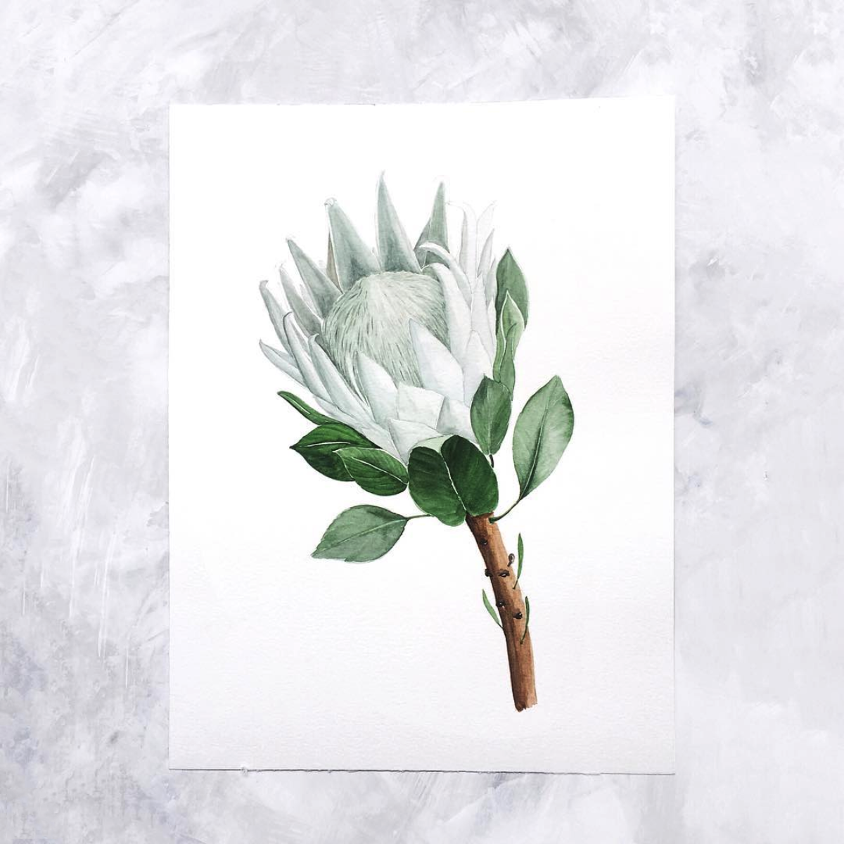 Watercolour protea.png