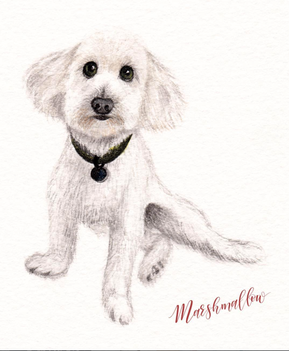 watercolour puppy.png