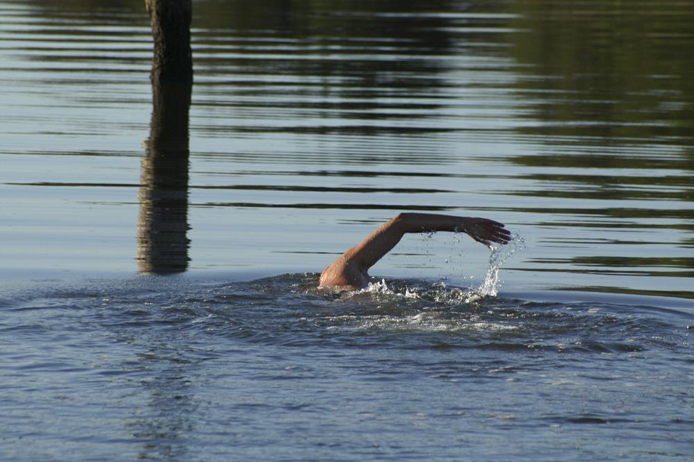 swimming home 4.jpg