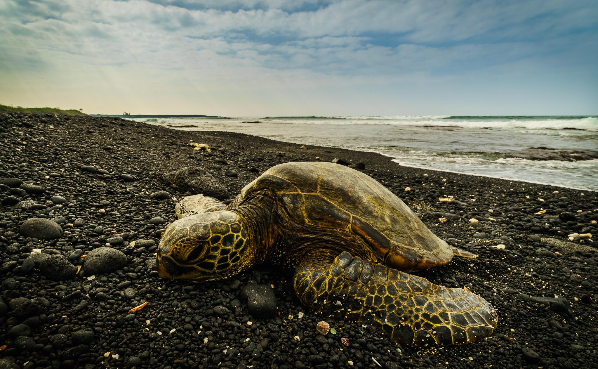 Kiholo Bay Turtles_003.jpg