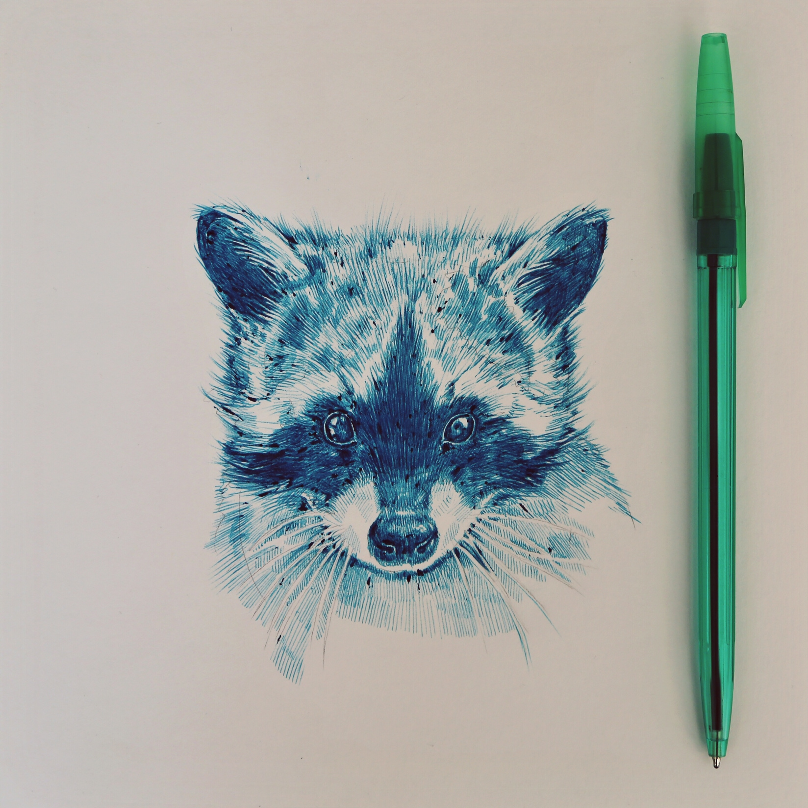 raccoon1.jpeg