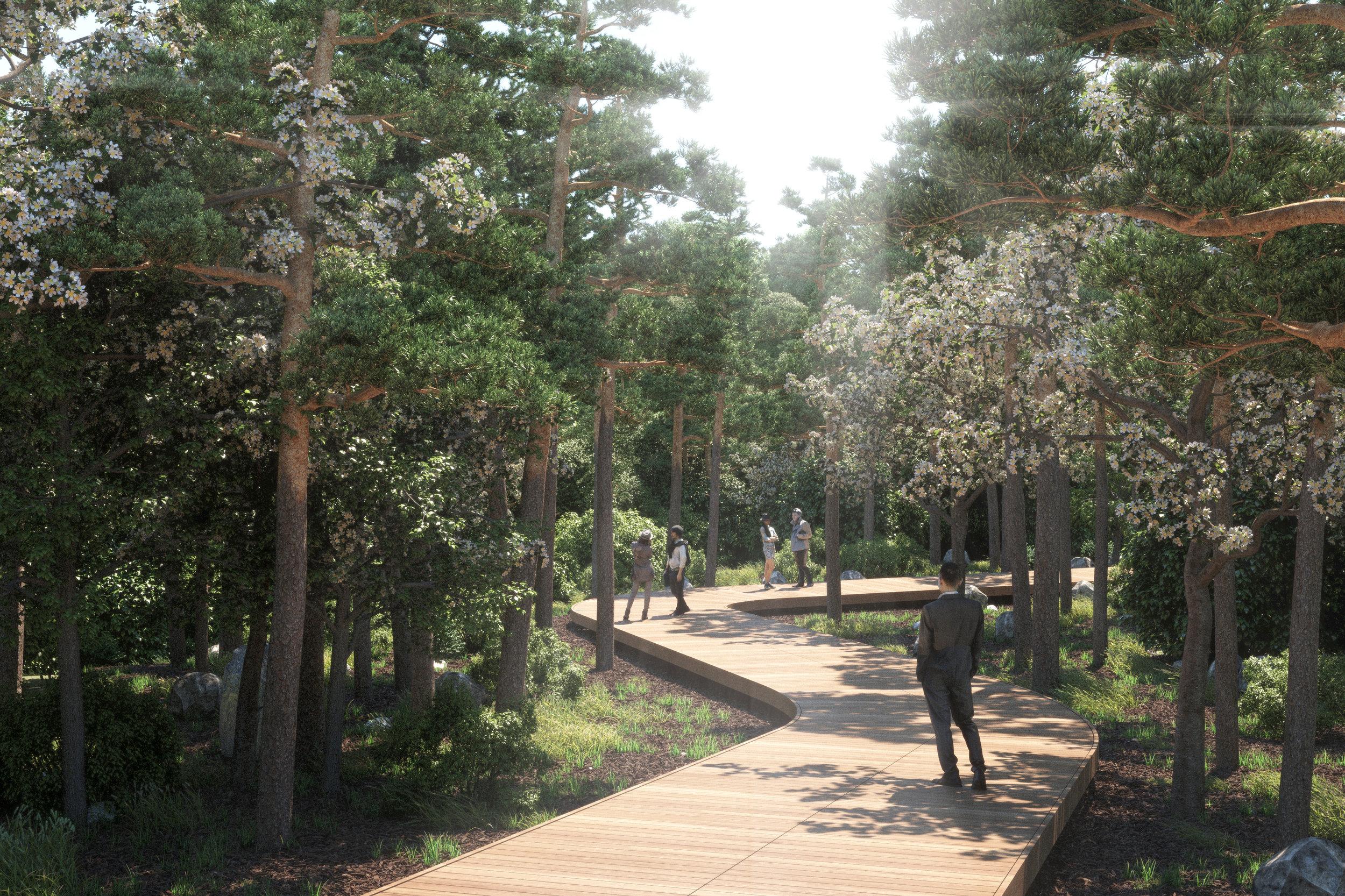 footpaths in forest.jpg