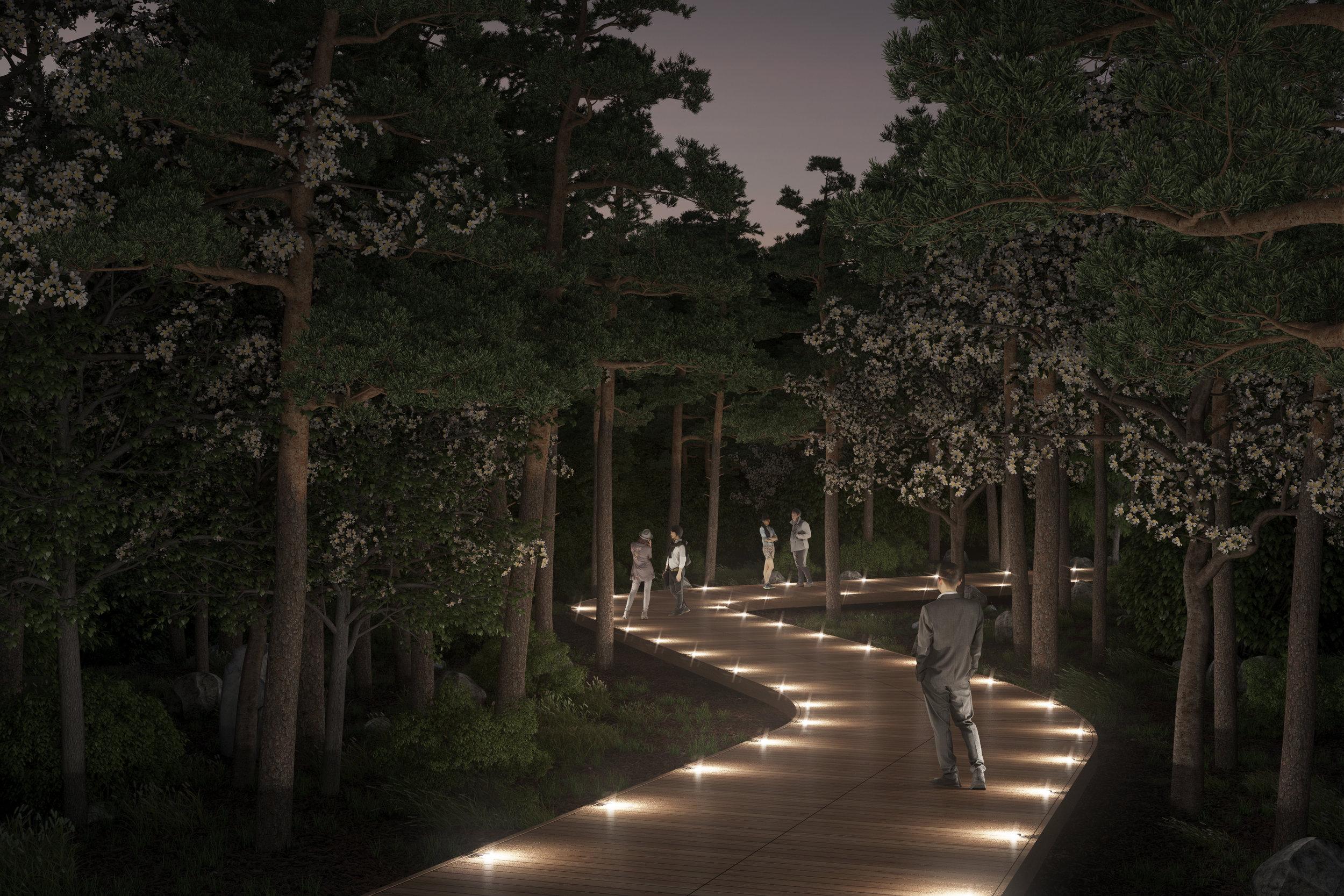 footpaths in forest night.jpg