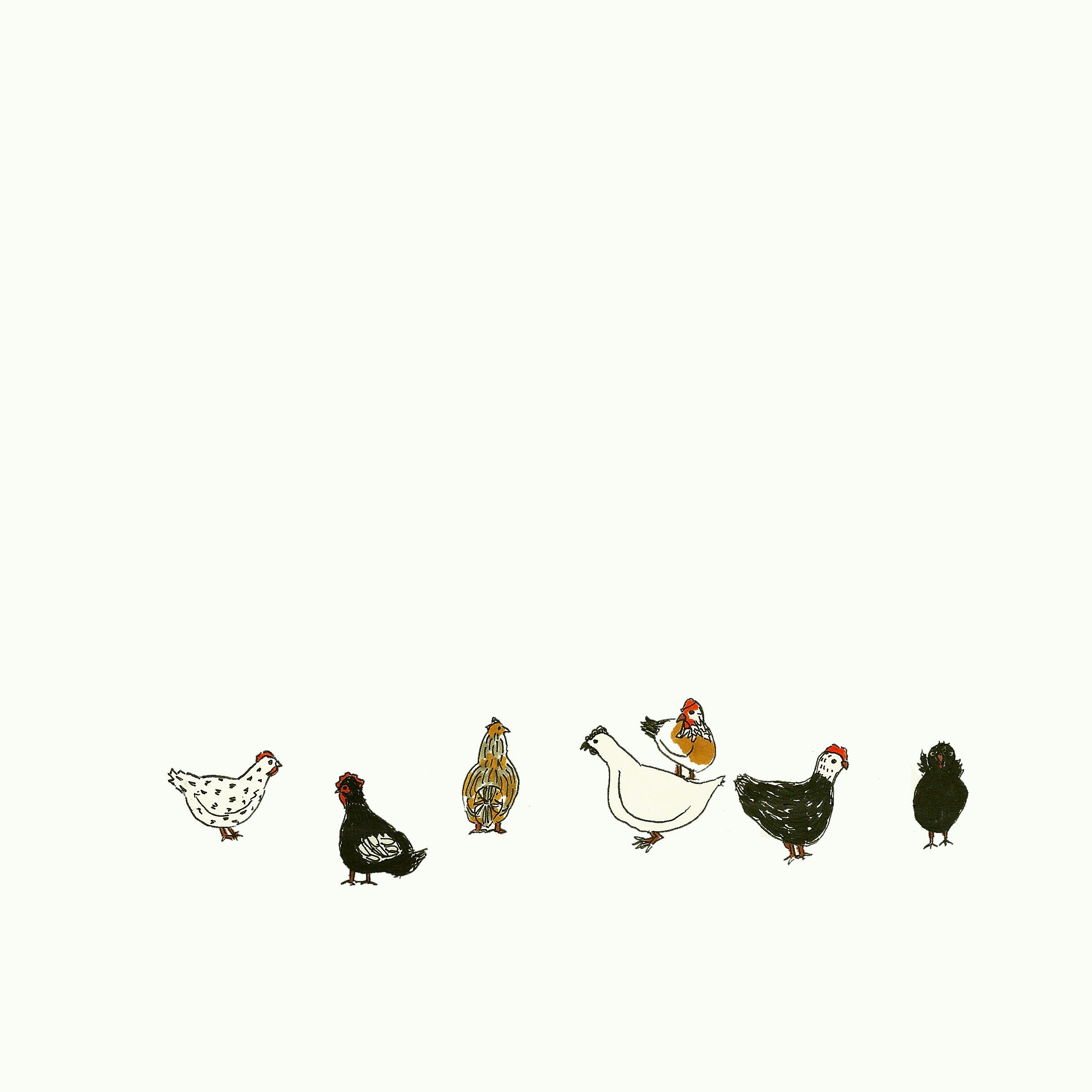Chickens. Kathryn Zaremba 2014