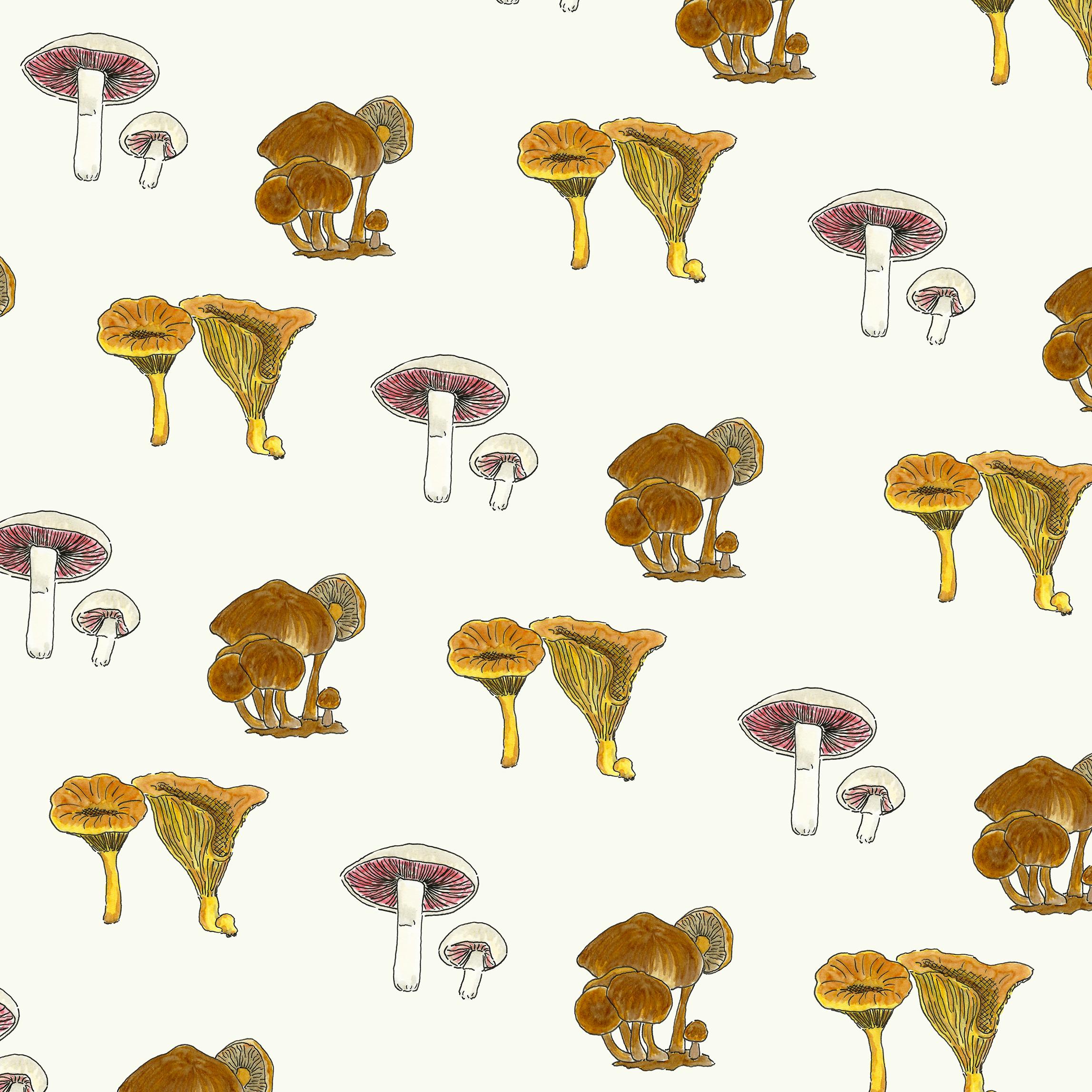 Edible Mushrooms by Kate Zaremba