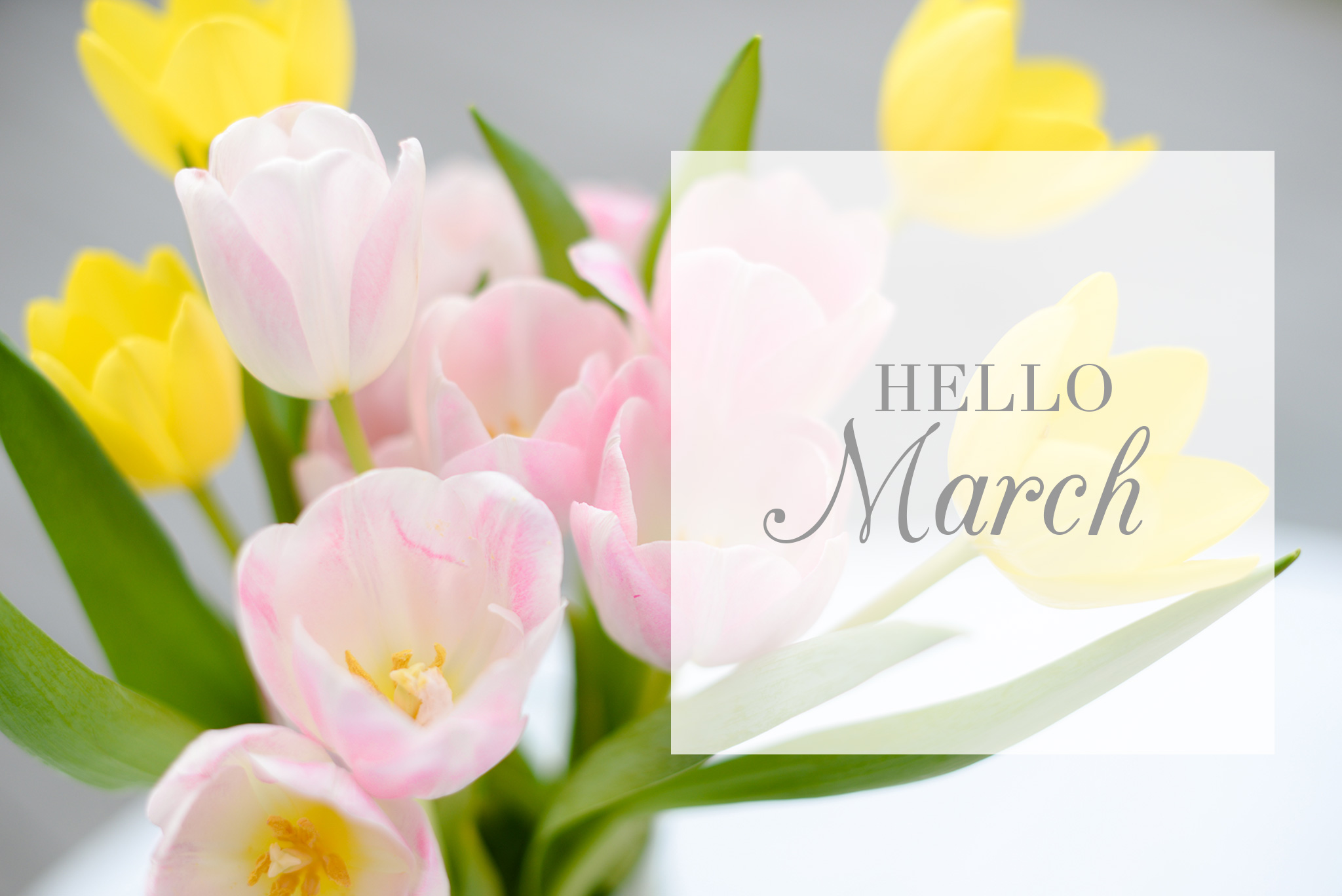 hello-march-new-beginnings-north-carolina-wedding-photographer