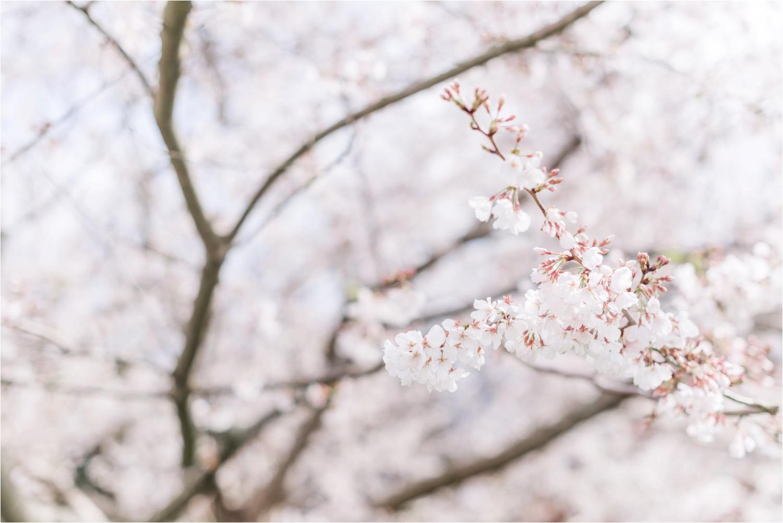 spring-cherry-blossoms-raleigh-north-carolina-travel.jpg