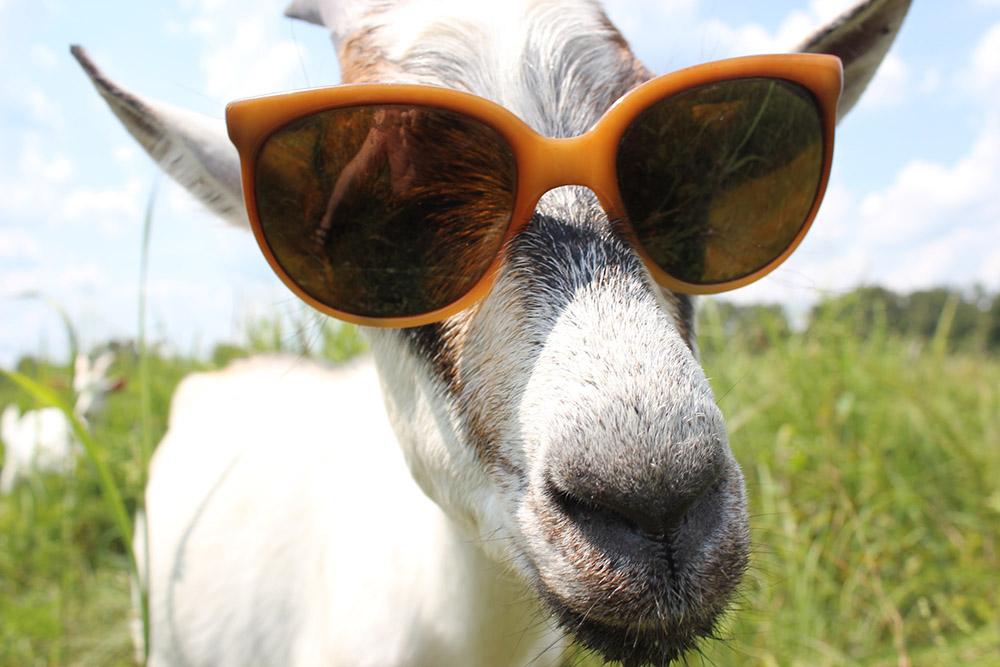 solar-goat.jpg