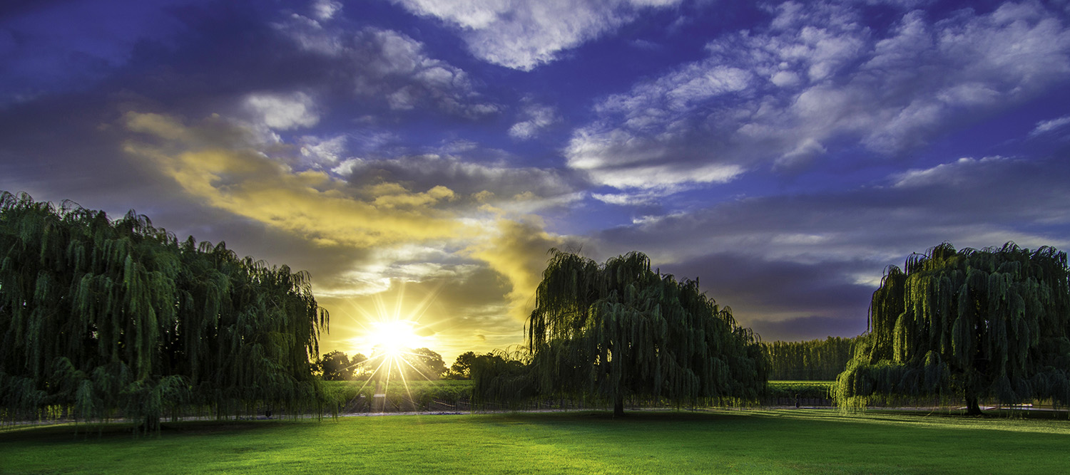 San Francisco Commercial & Industrial Photography-Sunrise over the vineyard