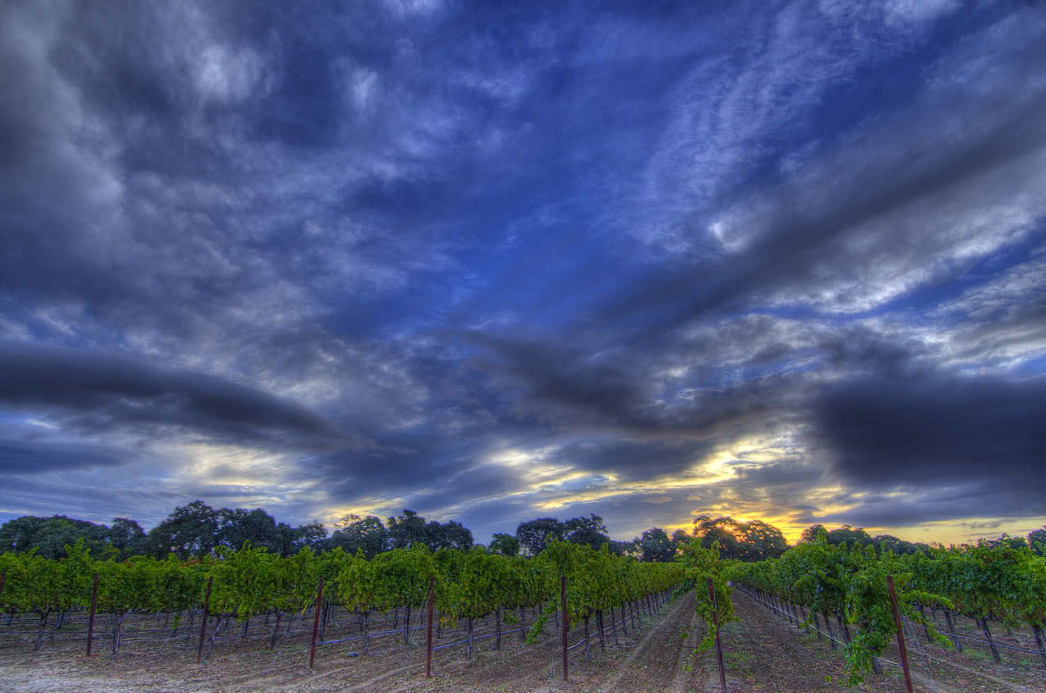 Vacaville Commercial & Industrial Photography-Napa vineyard approaching fall