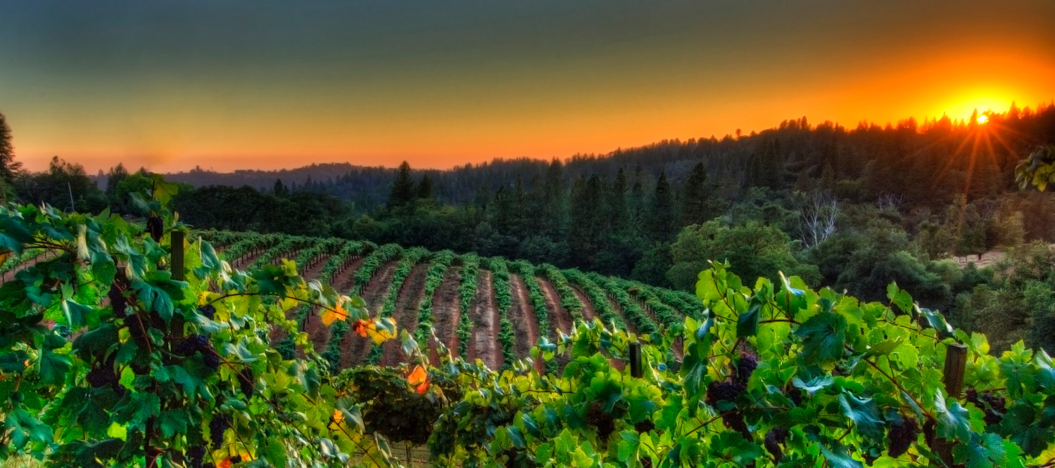 Sacramento Commercial & Industrial Photography-Boeger Winery, Placerville