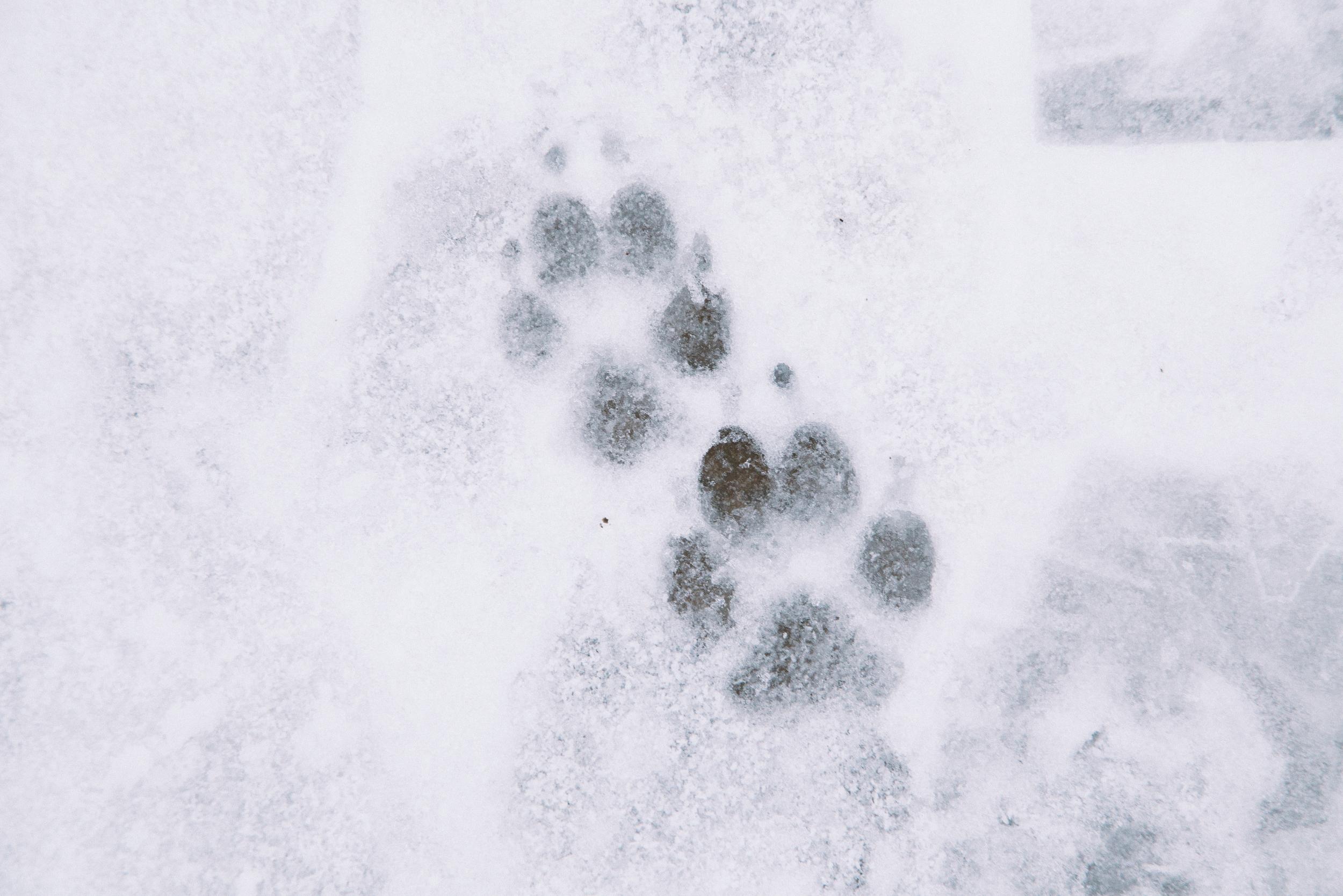 25 // 365 Puppy paws