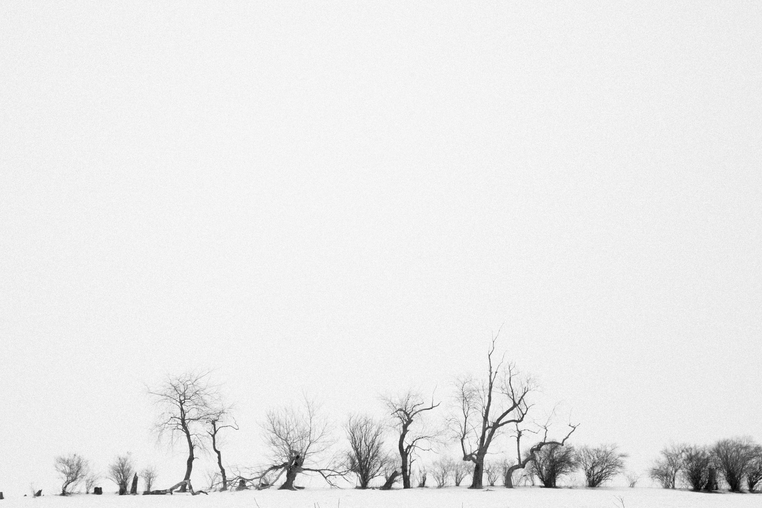 45 // 365 Dancing trees in the snow
