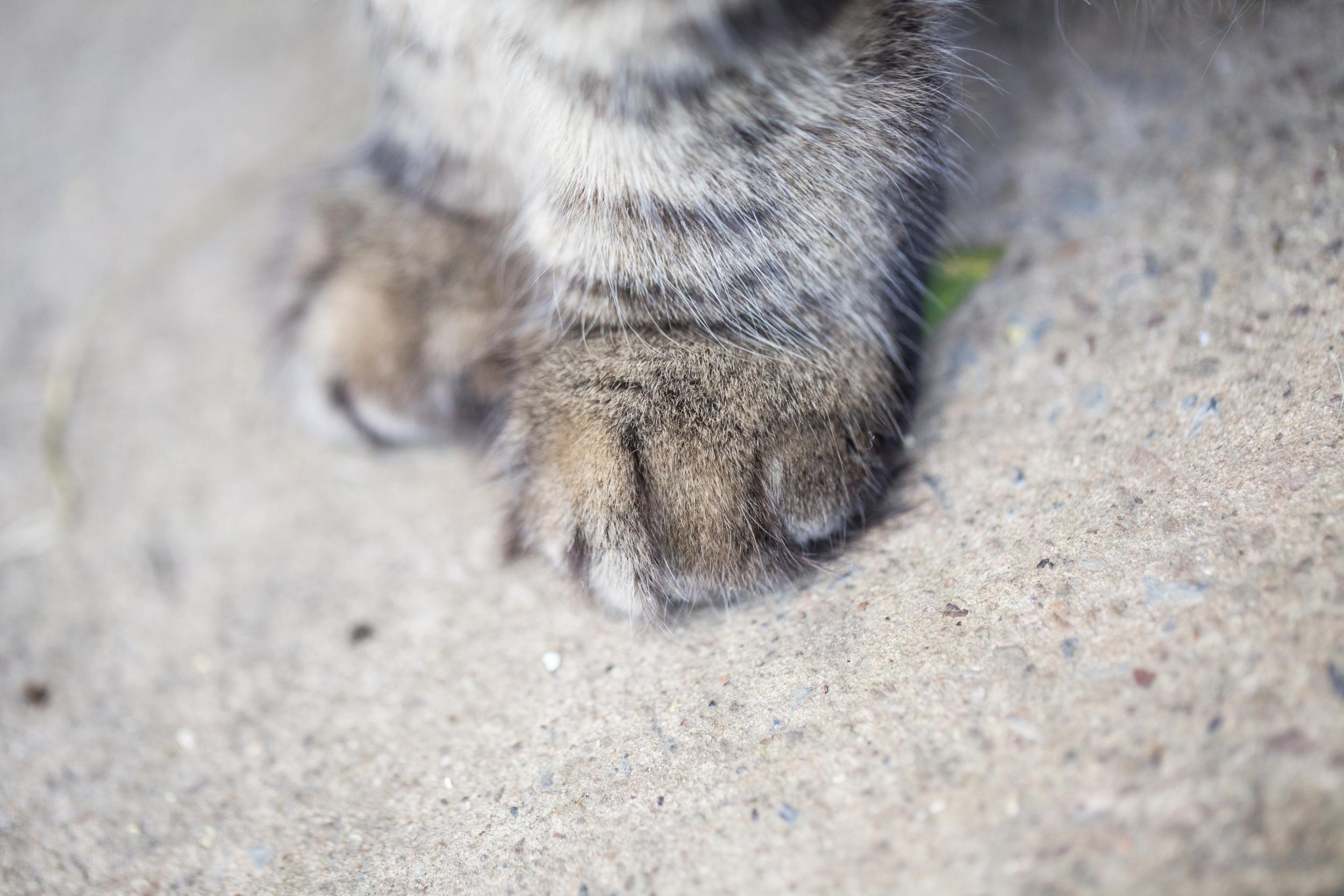 204 // 365 Chunk paws