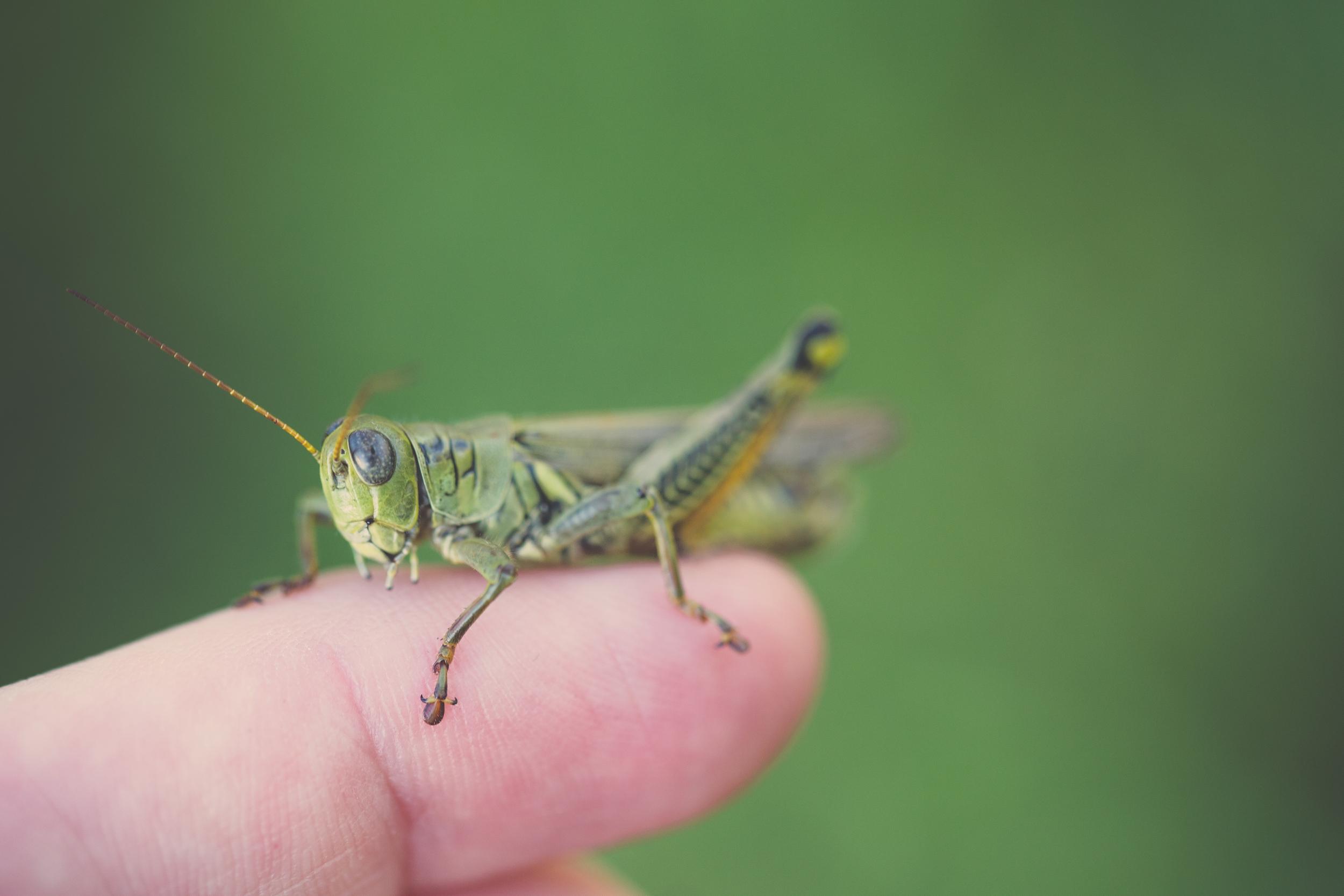 278 // 365 Grasshopper hang out
