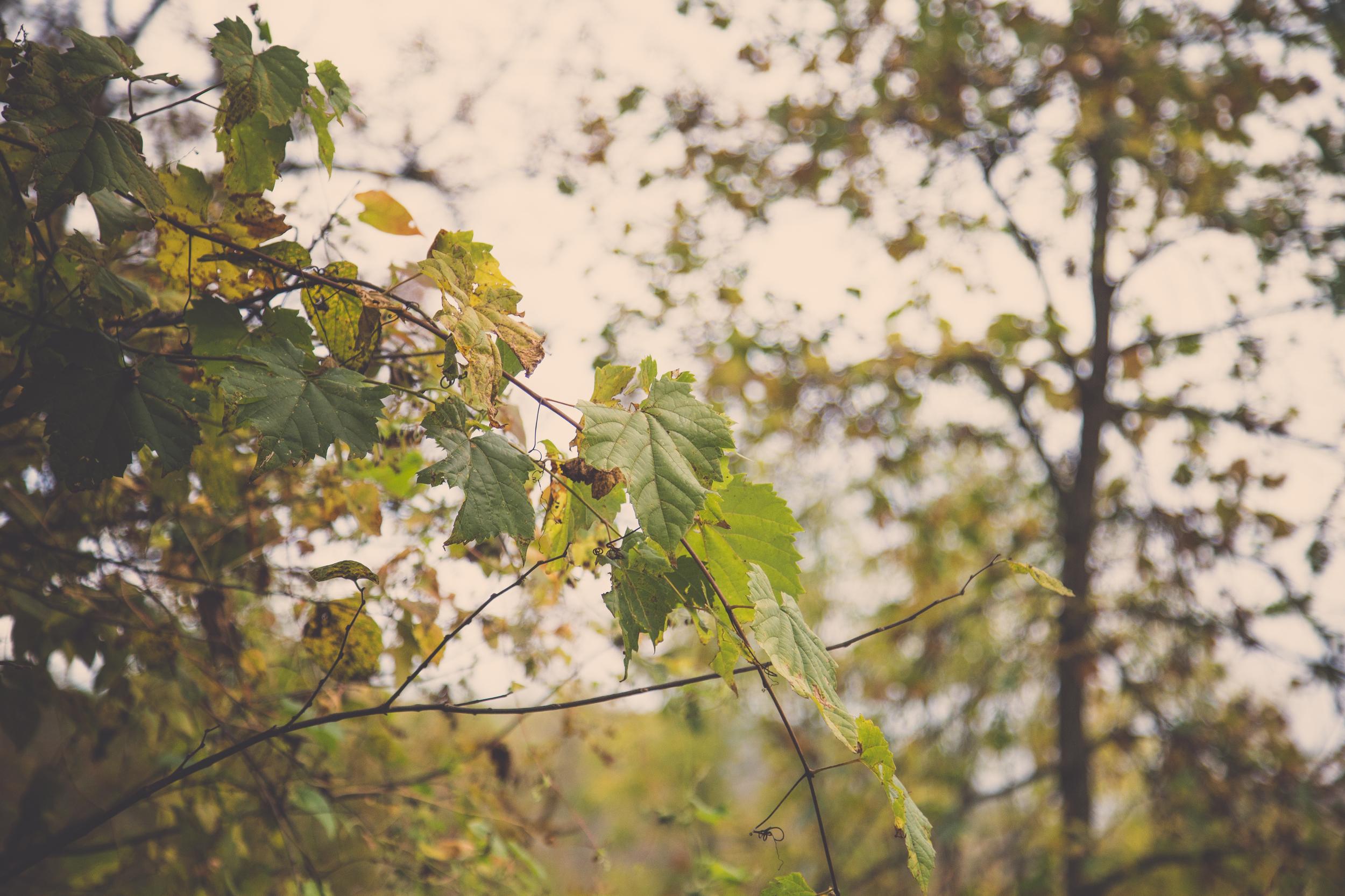 286 // 365 Gloomy fall day