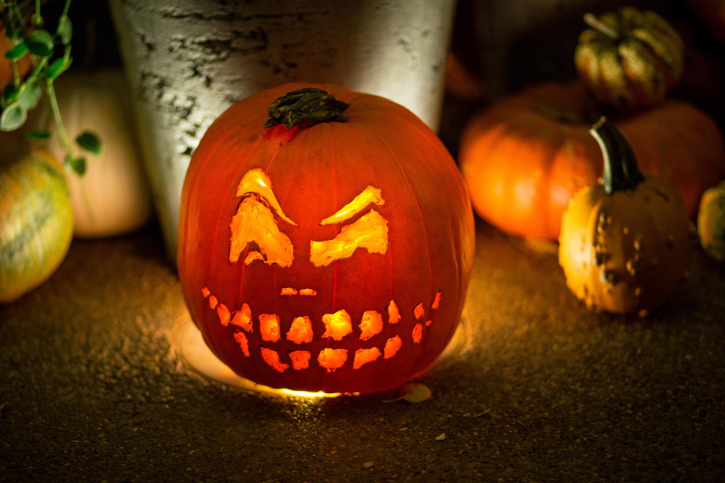 289 // 365 PSU Arboretum pumpkin competition