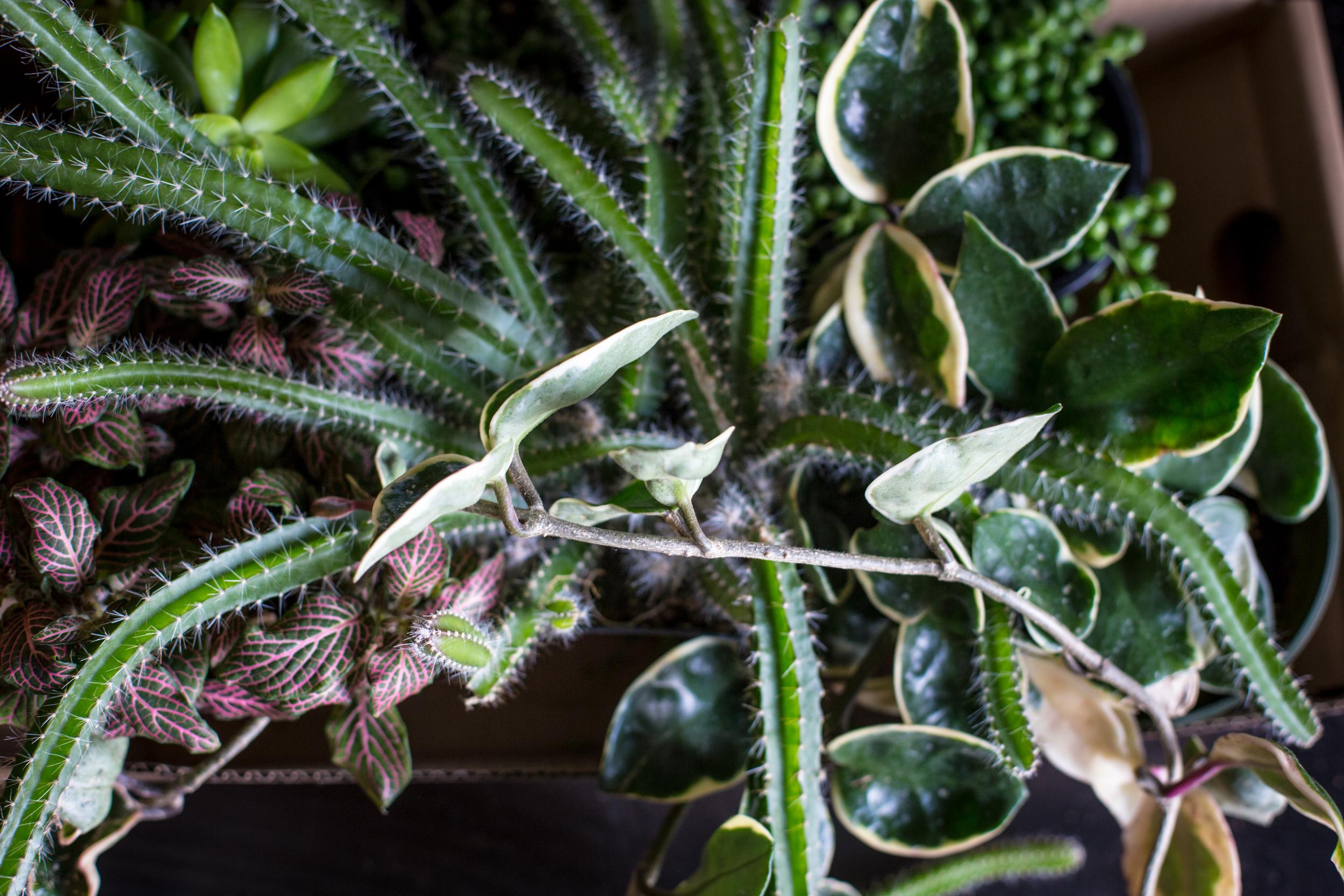 75 // 366 Terrarium plant haul