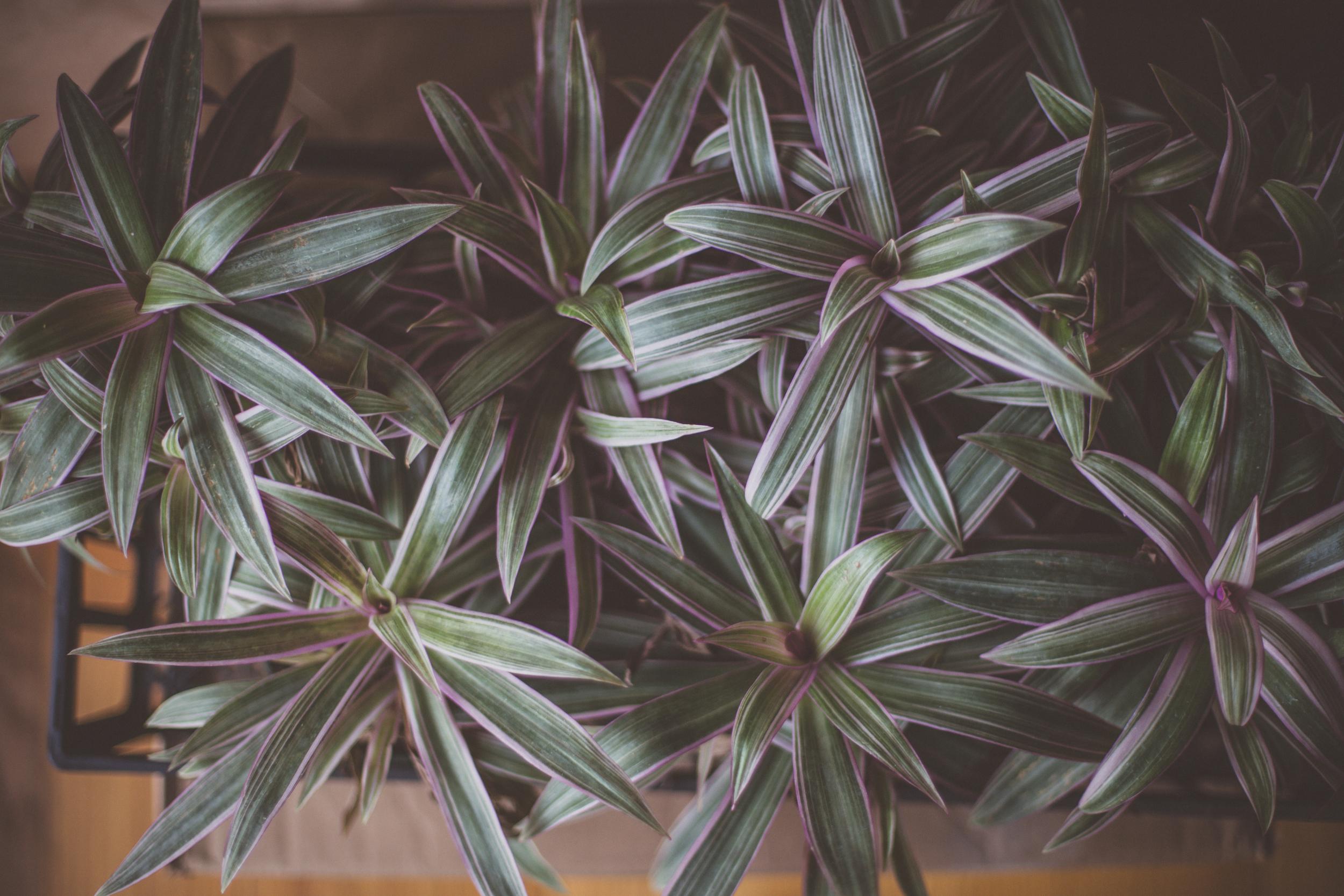 76 // 366 Plant haul pt. 2