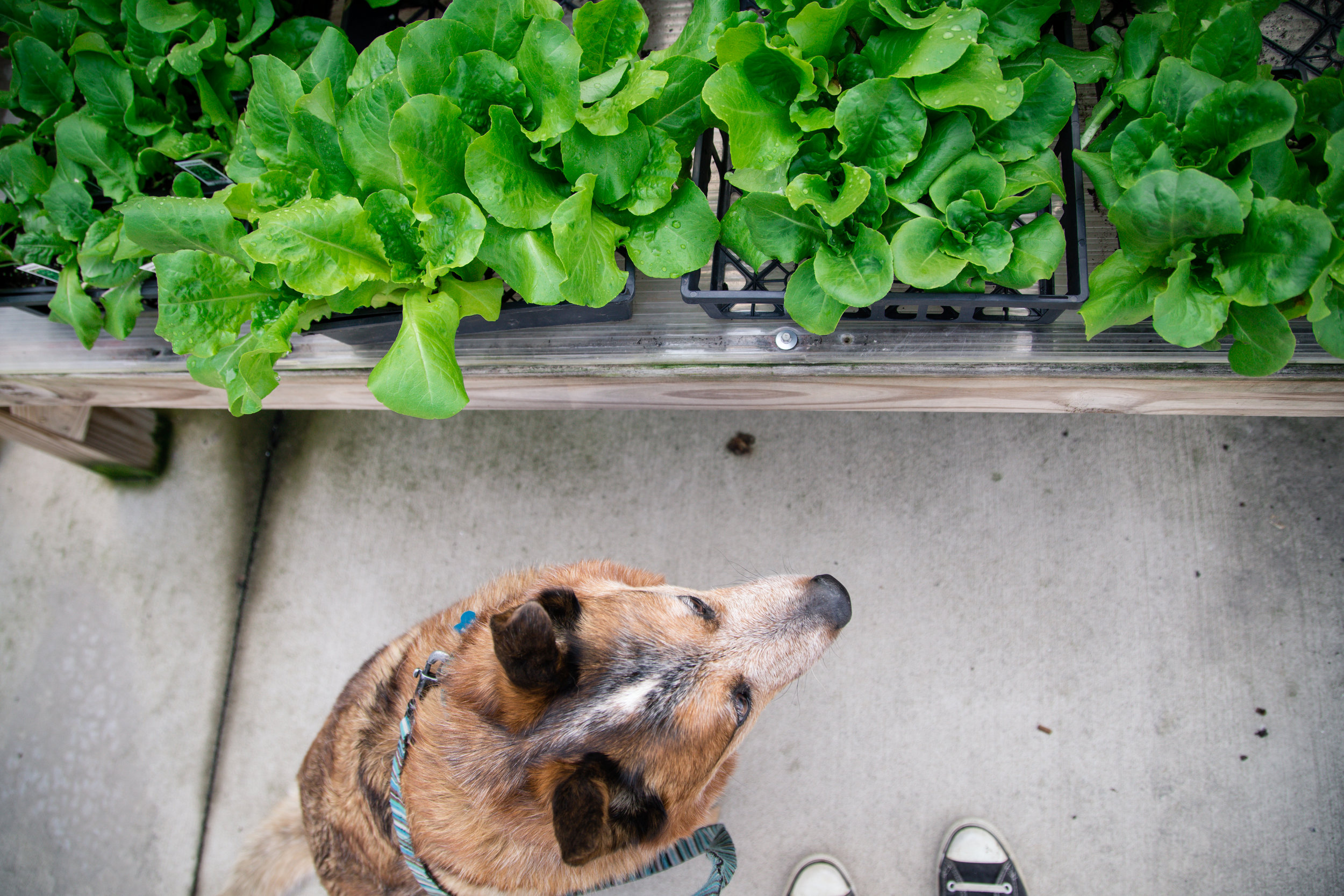 153 // 366 Greenhouse shopping with the pupper