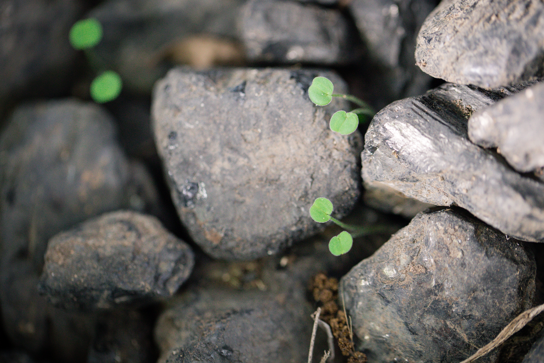 170 // 366 Growth in the coal pile
