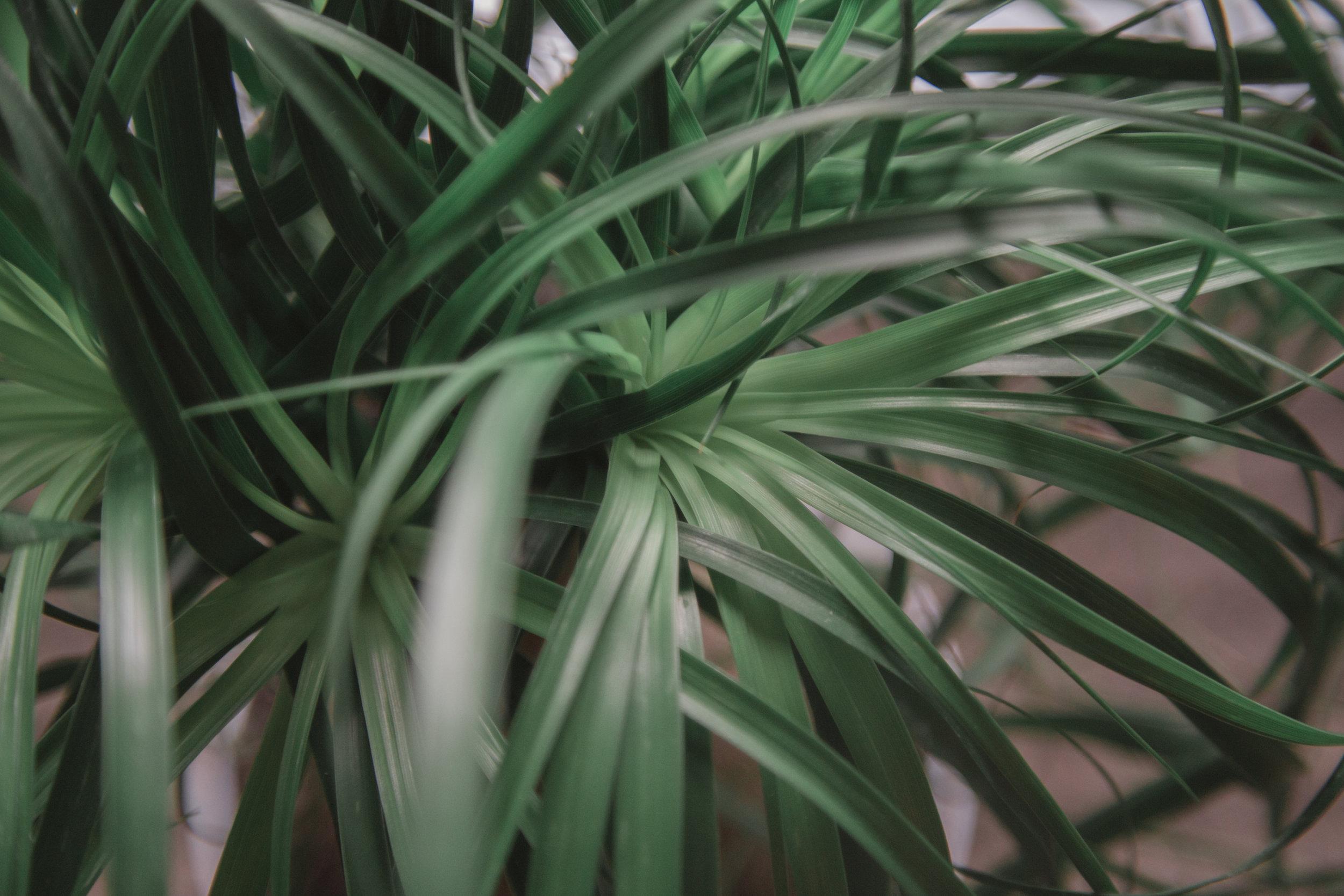 214 // 366 Gorgeous birthday plant from Seth