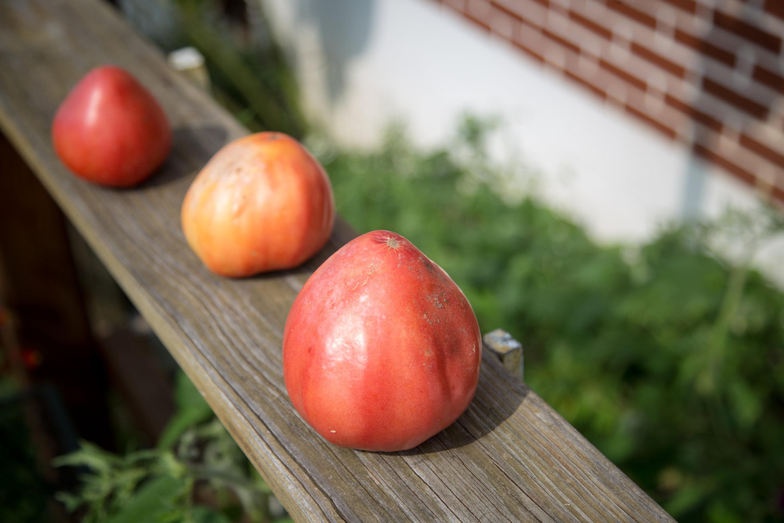 251 // 366 Grandma D's late tomatoes