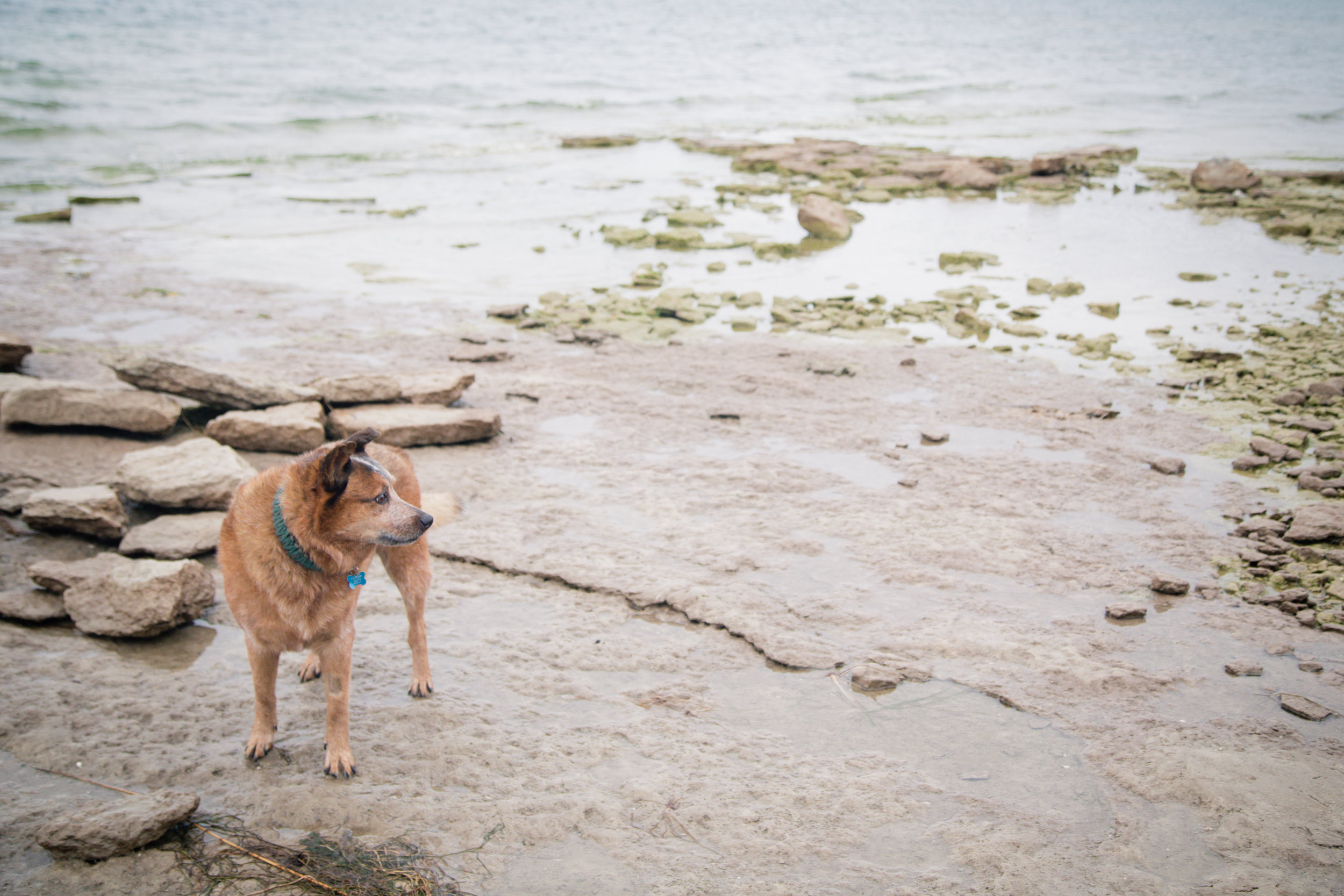 276 // 366 Pupper on Lake Ontario