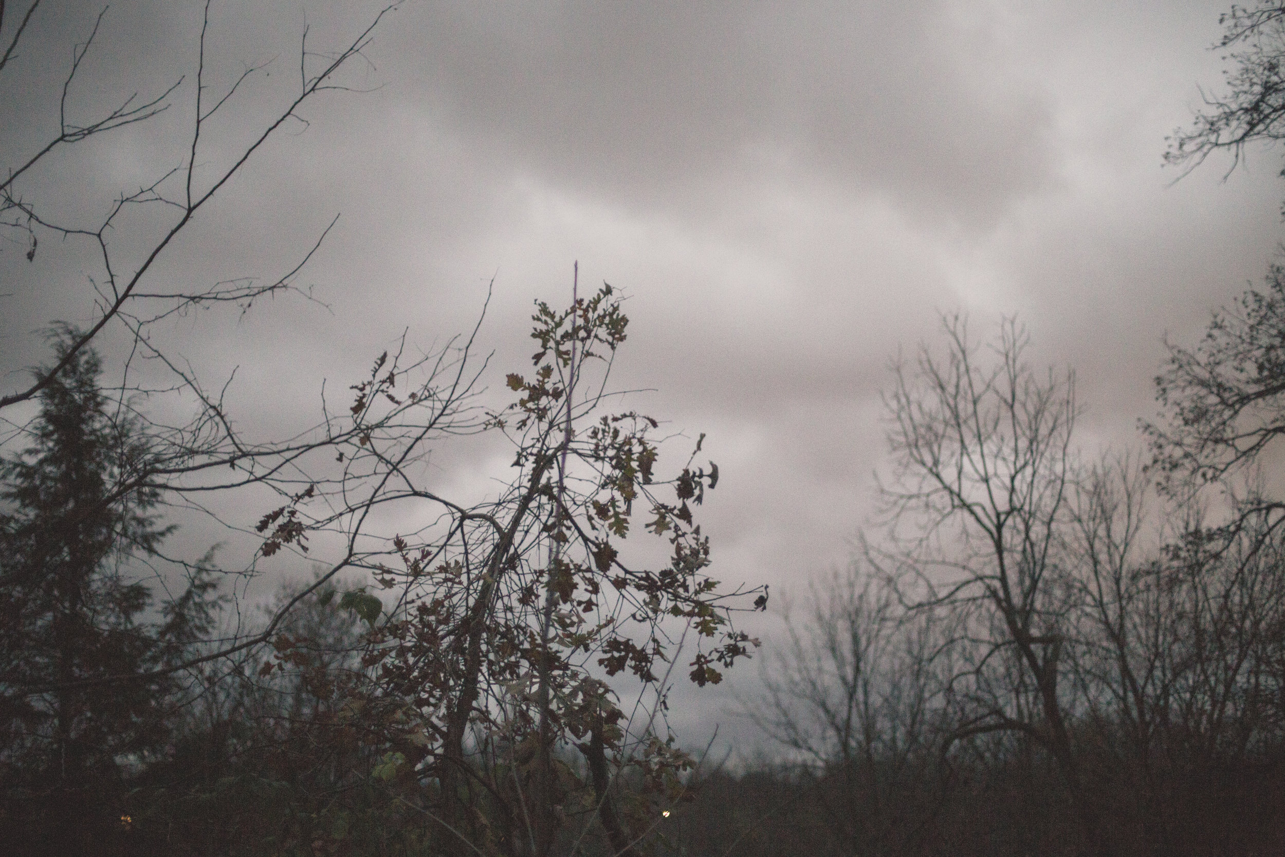 314 // 366 Stormy day on the creek