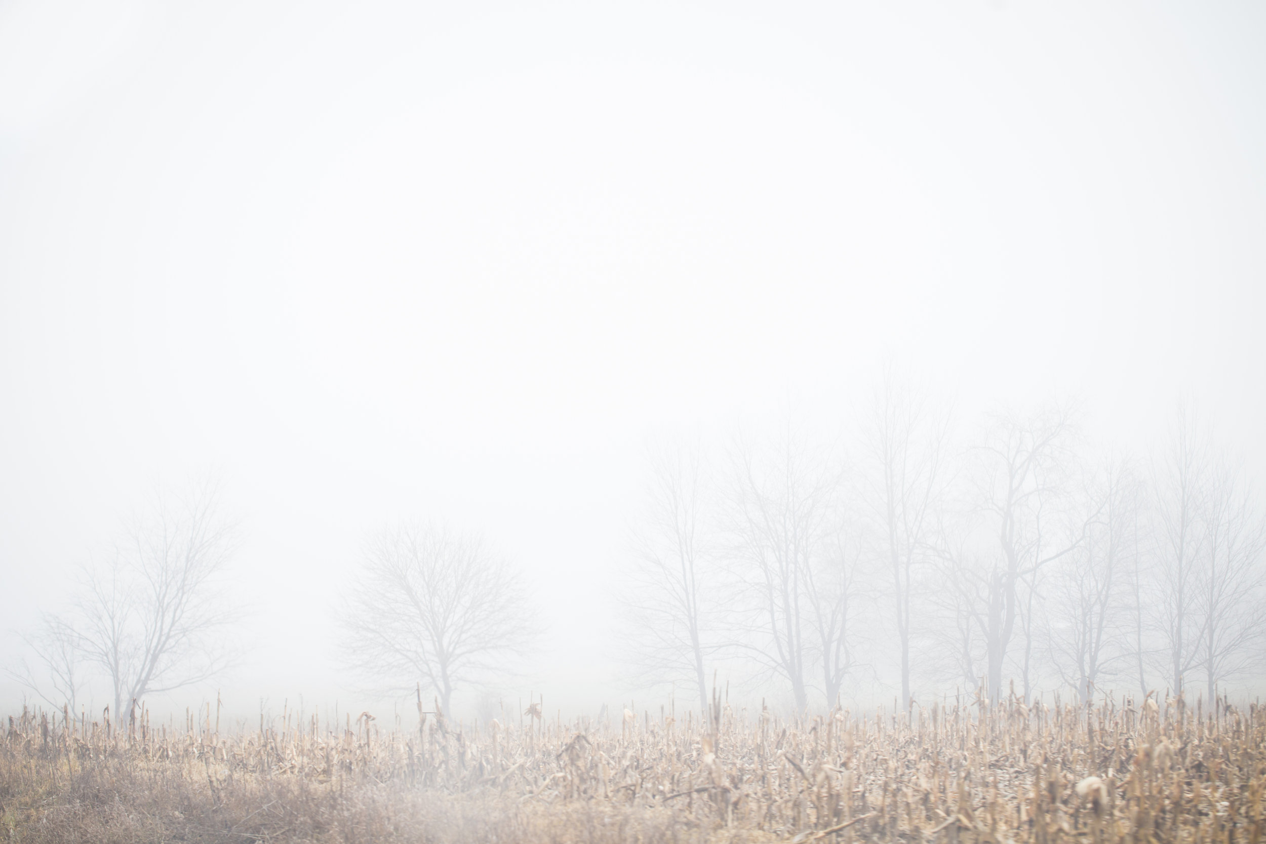 21 // 365 Foggy field