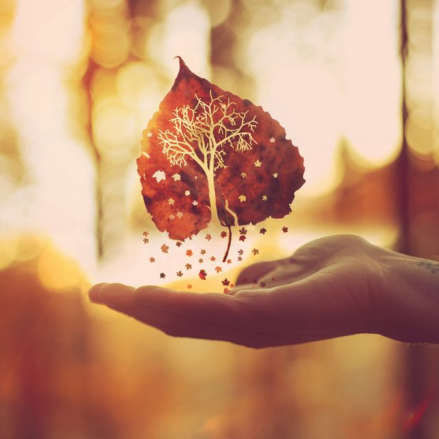 hand with tiny star like leaves floating.jpg